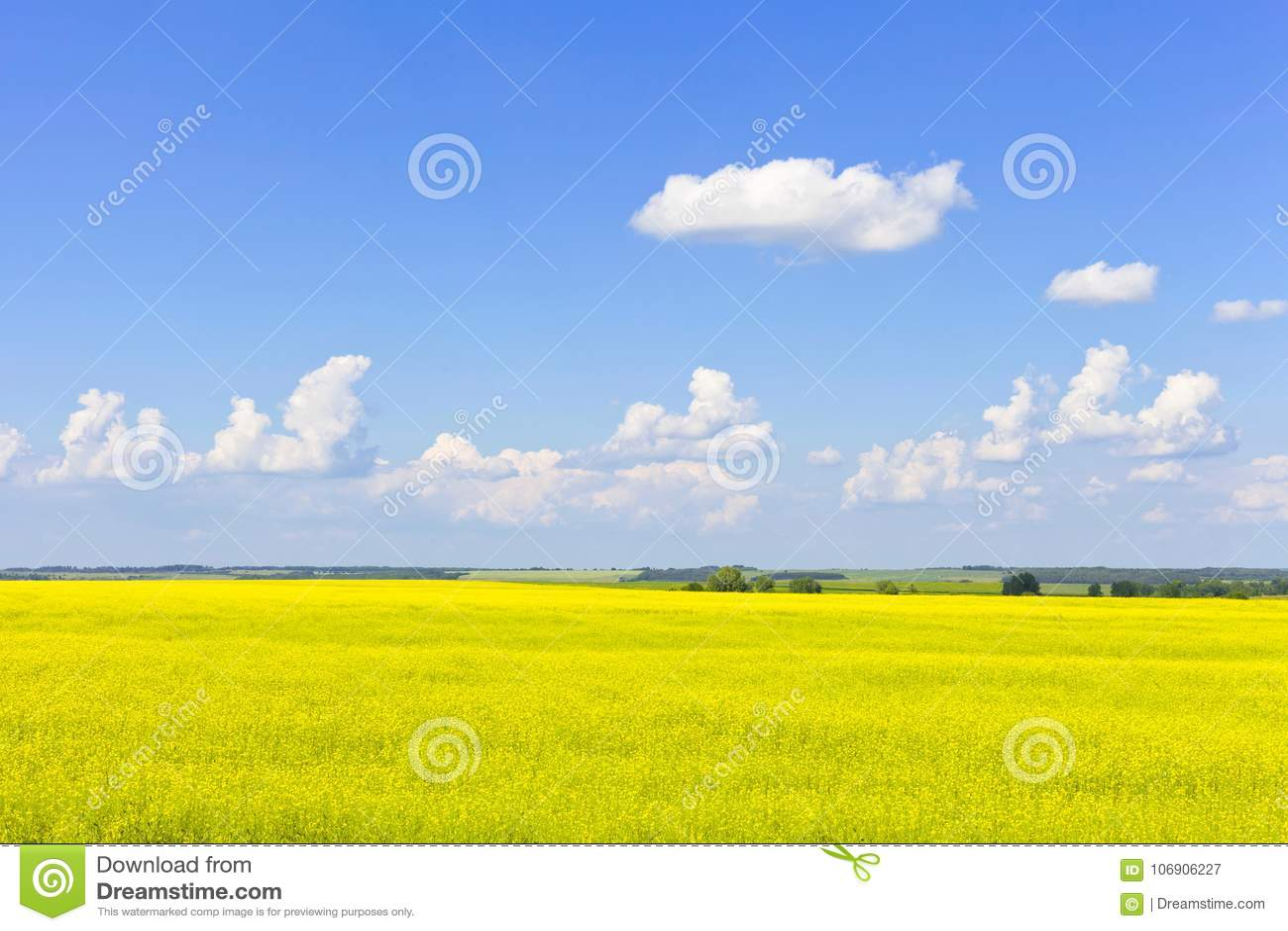 Kolor żółty kwitnie na polu z niebieskim niebem i chmurnieje