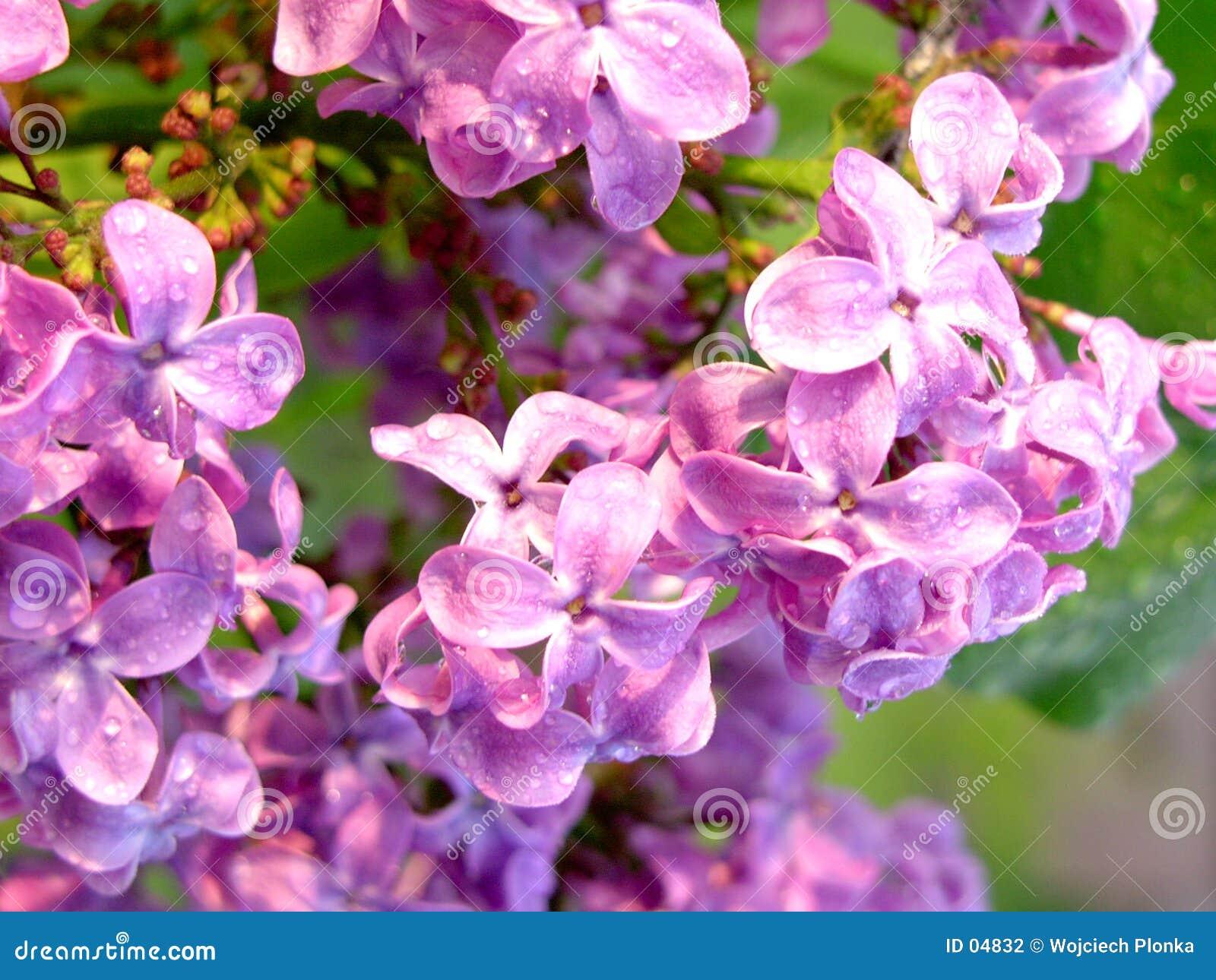Kolor kwiatów