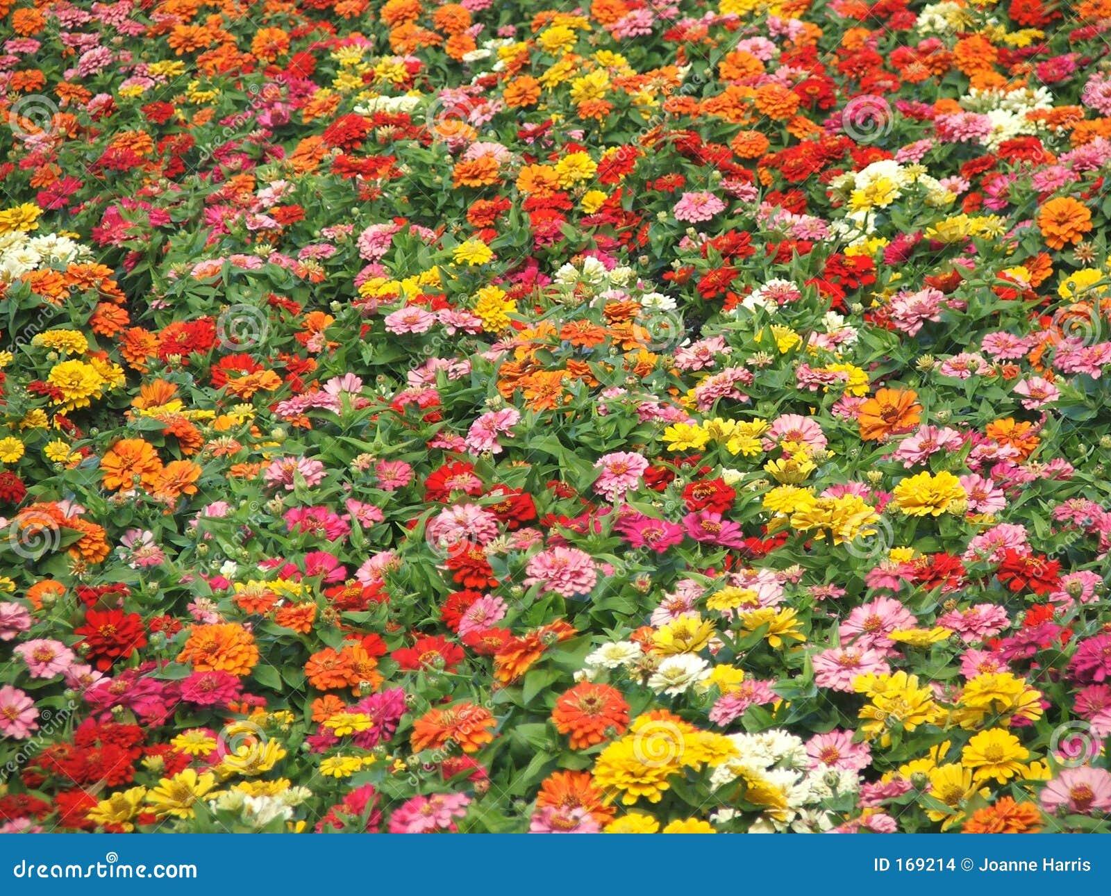 Kolor kwiatów jesieni