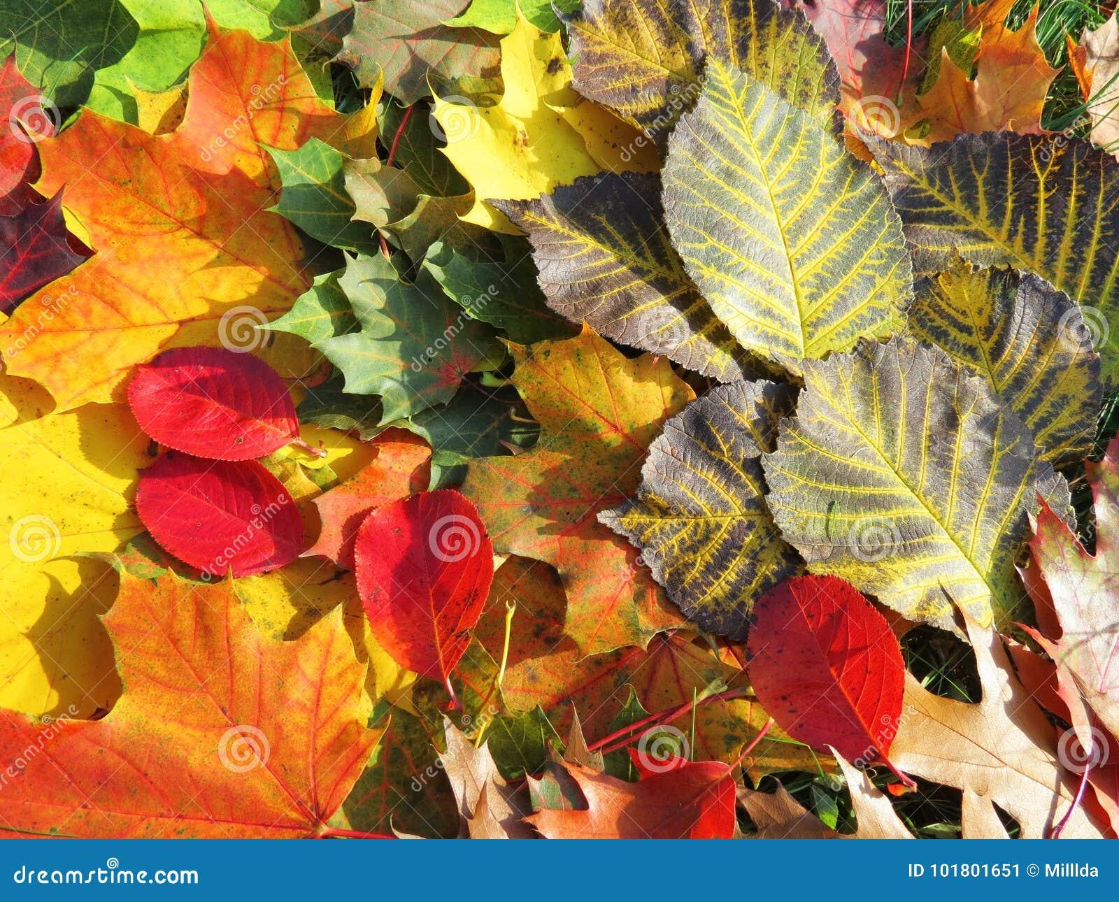 Kolor liście jesienią