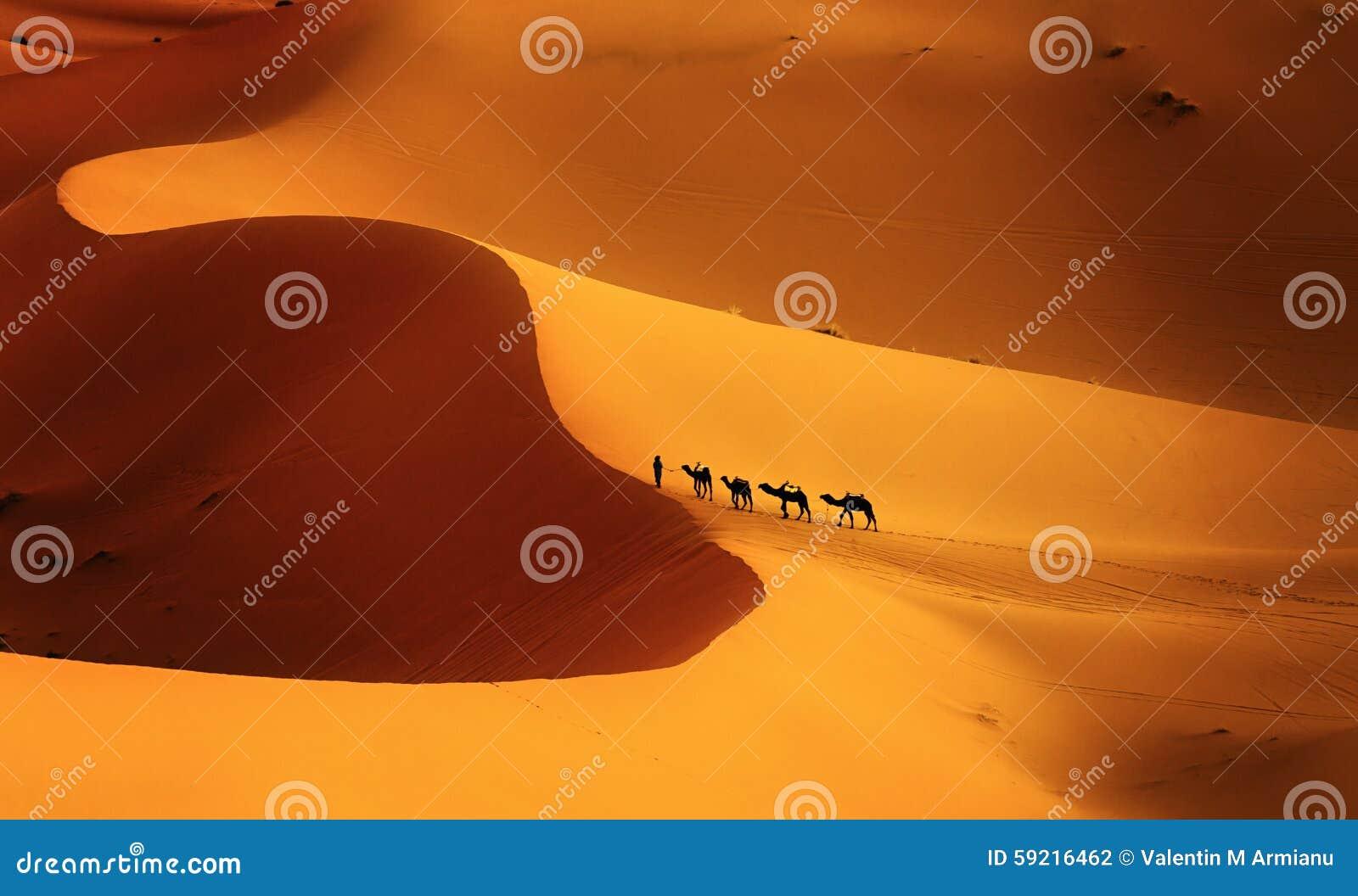 Kolor pustynia