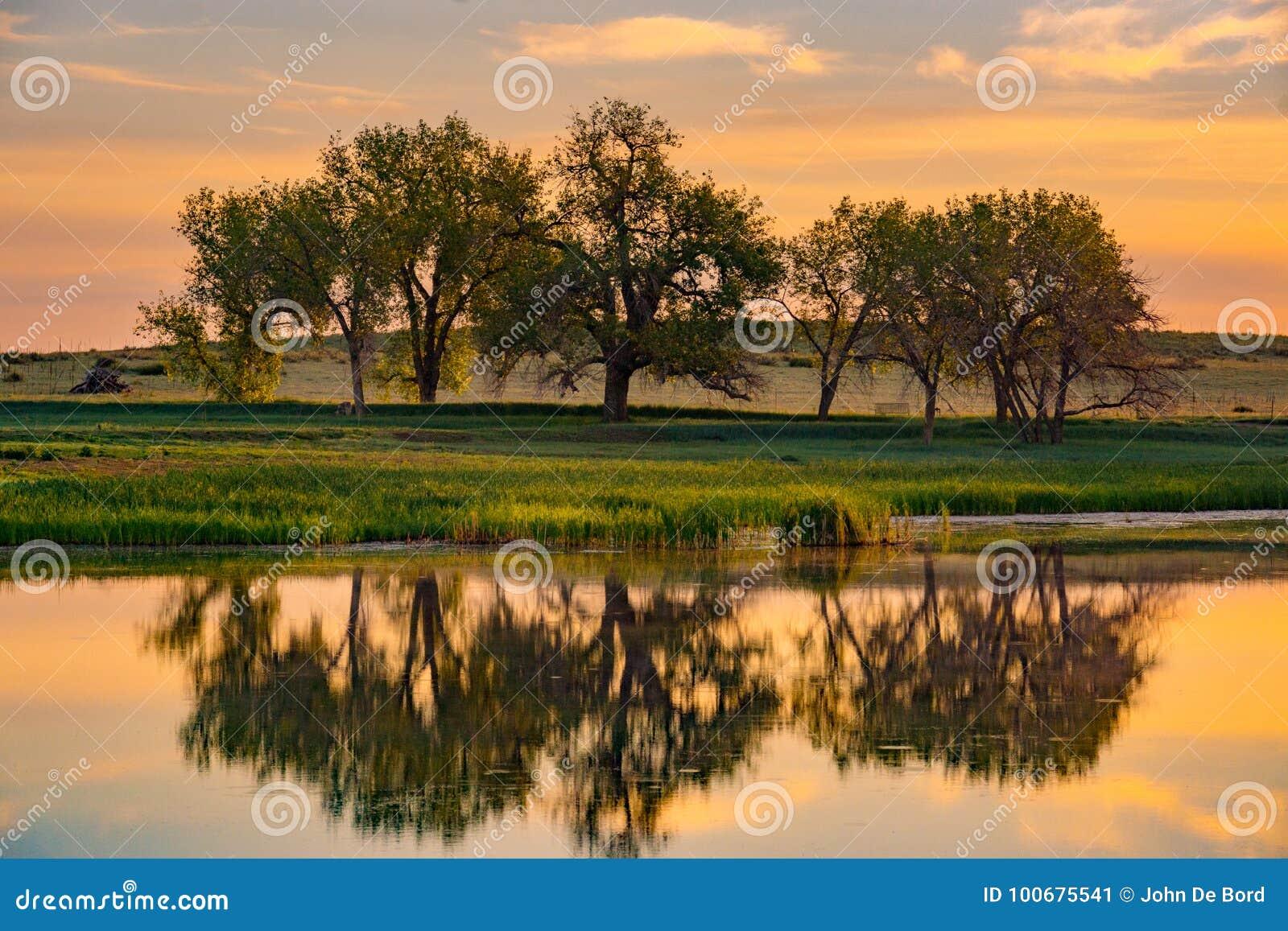 Kolorado jezioro przy wschodem słońca & drzewa