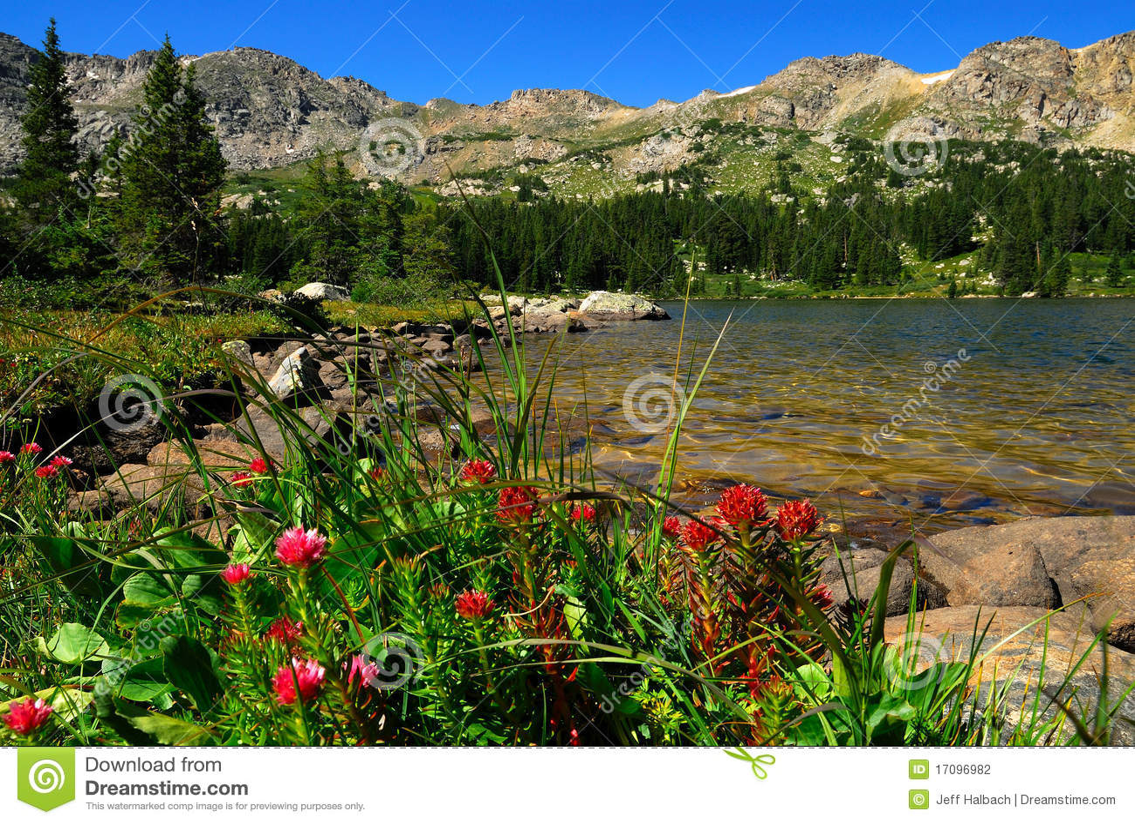 KoloradoWildflowers