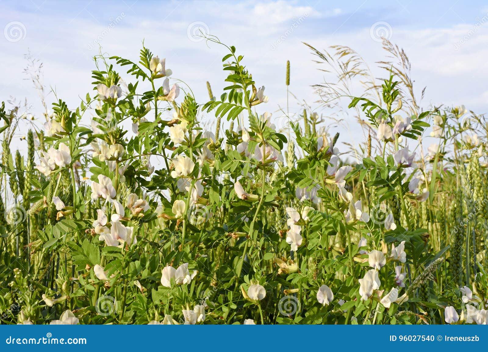 Kolorowa łąka z kwiatami zamyka up przeciw niebu