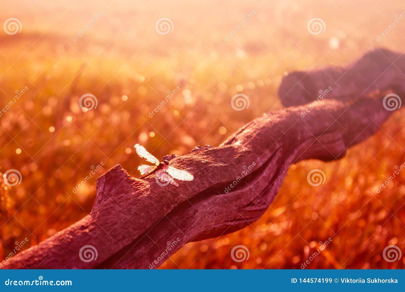Kolorowa lato scena z pięknym dragonfly na drewnianym kiju przy zmierzchem Lata tło stonowany