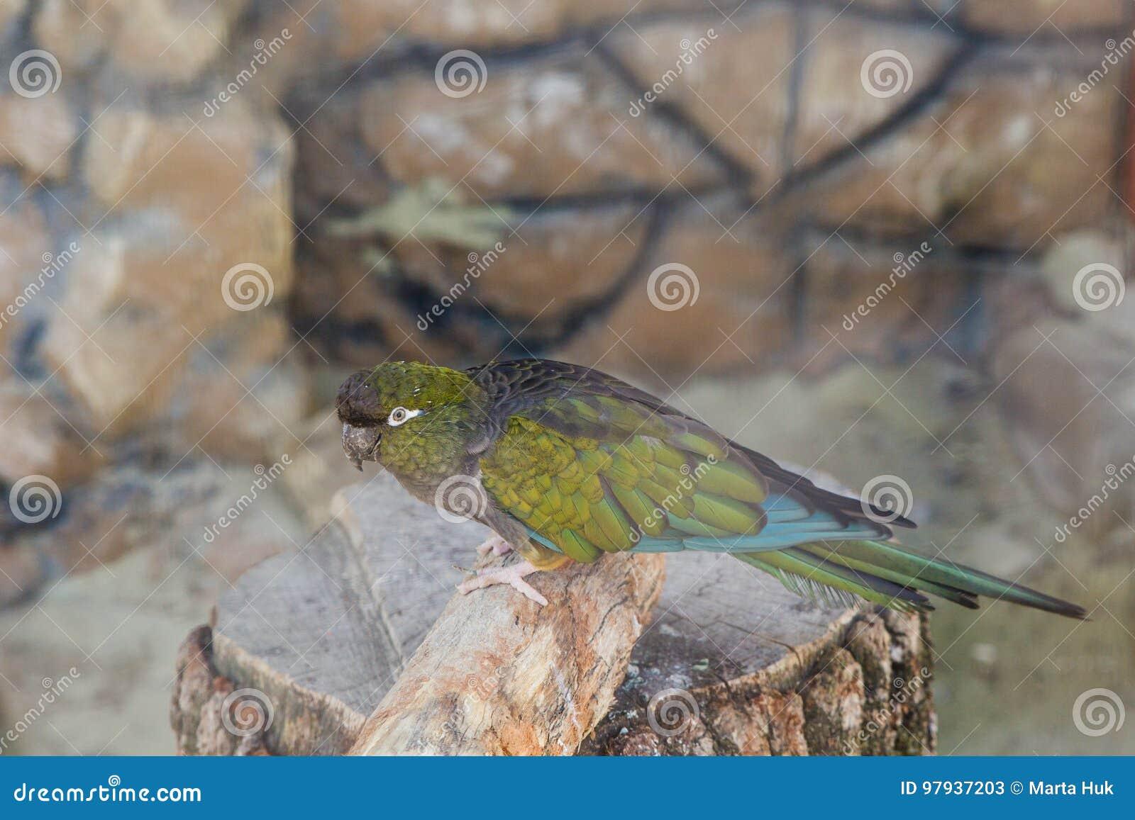 Kolorowa papuga w klatce w zoo