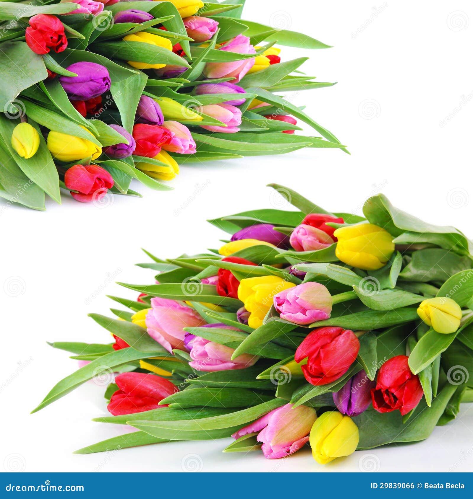 Wiosna tulipanu kwiaty
