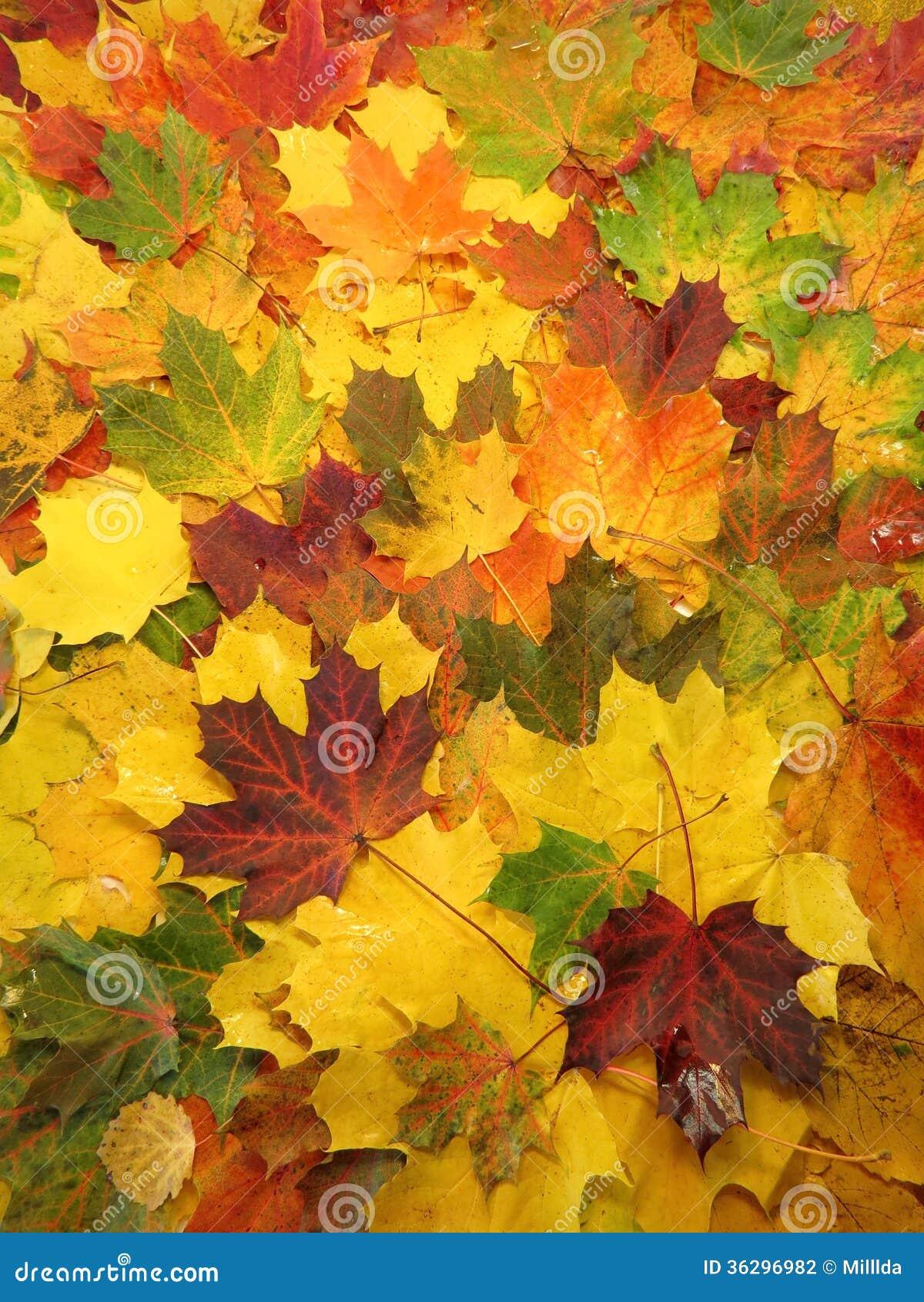 Kolorowi jesień liście