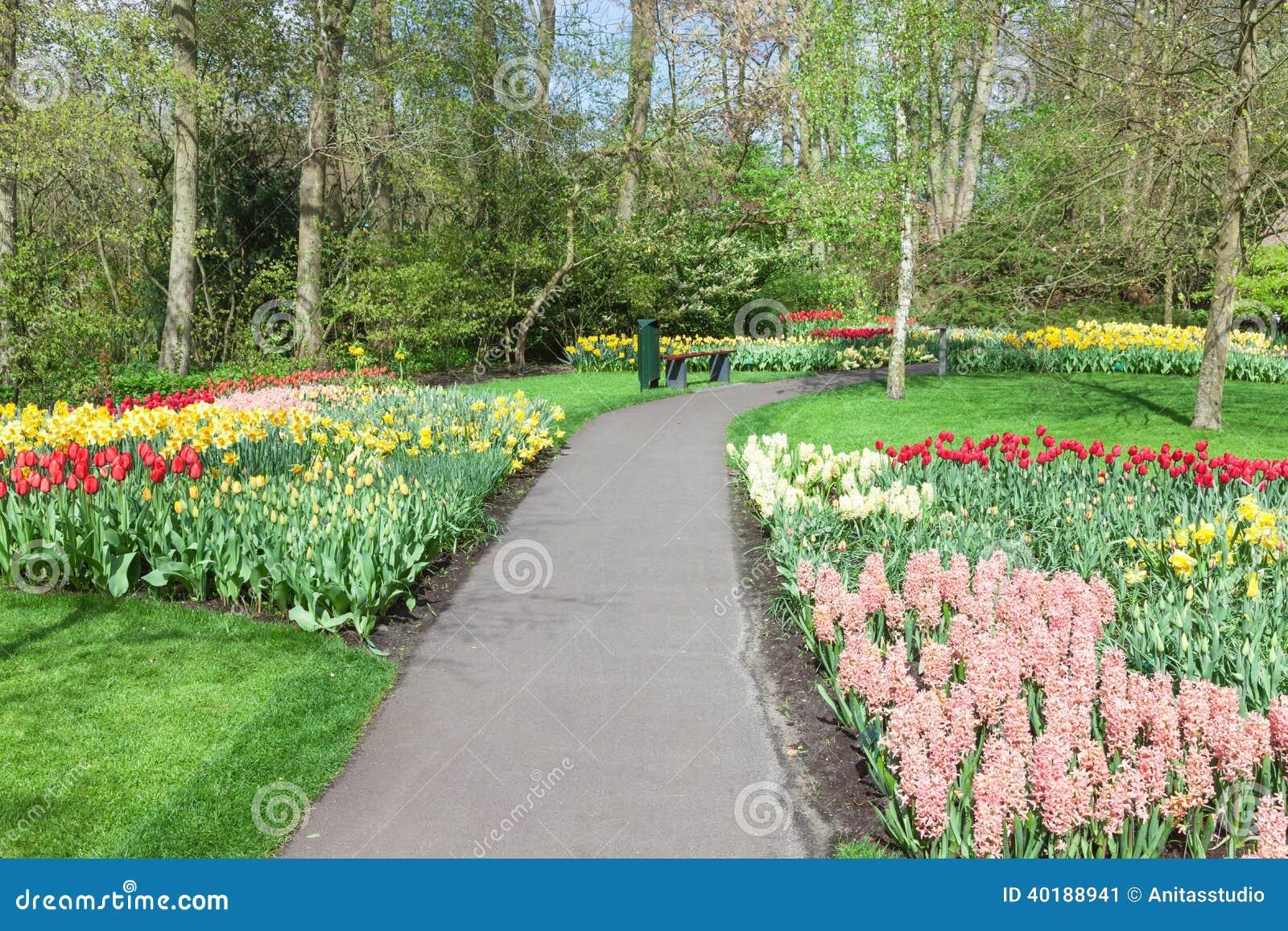 Kolorowi kwiaty i okwitnięcie w holenderskiej wiośnie uprawiają ogródek Keukenhof (Lisse, holandie)