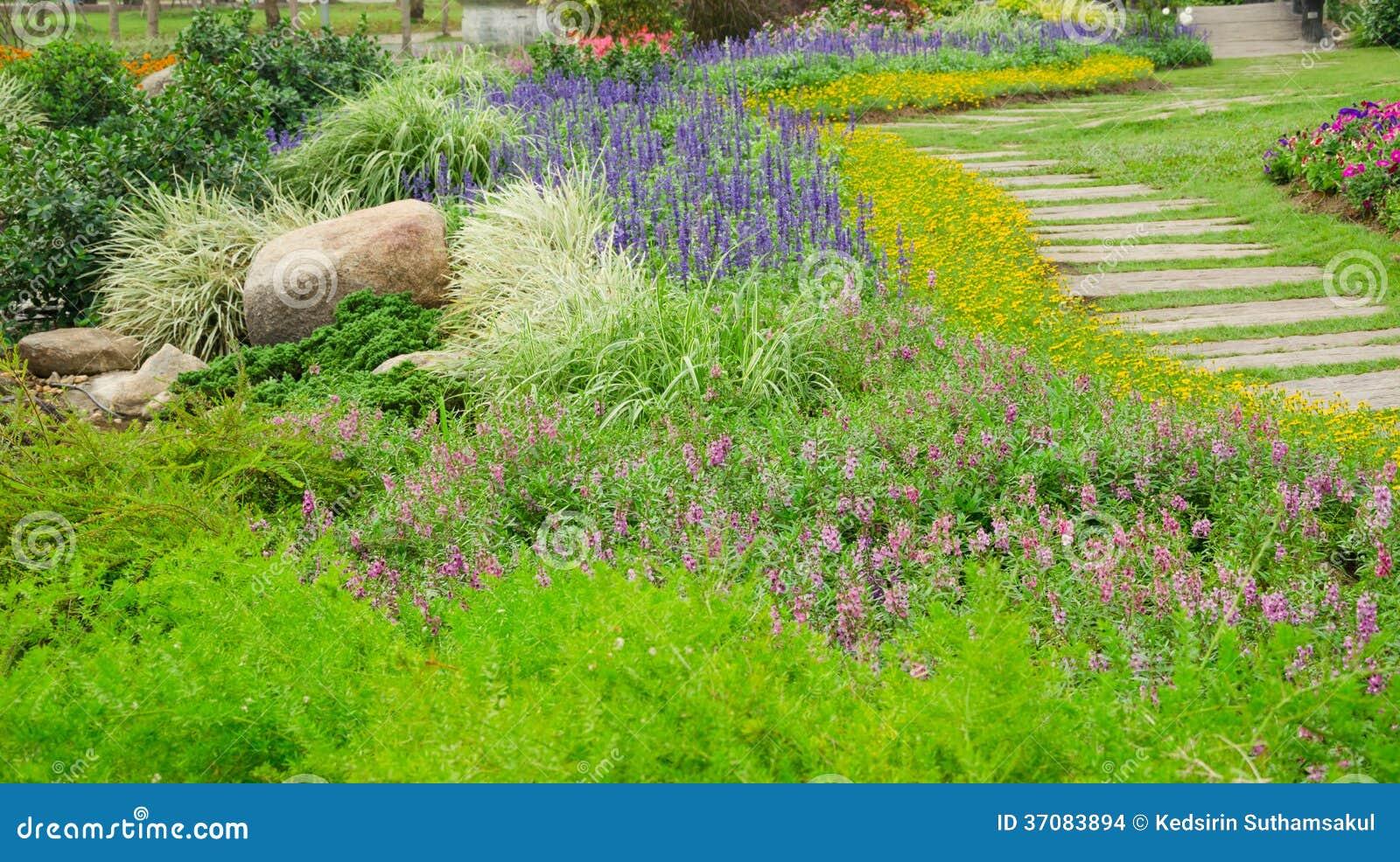 Download Kolorowi Kwiaty W Pięknym Natura Parku, Tajlandia Zdjęcie Stock - Obraz złożonej z okwitnięcie, rocznik: 37083894