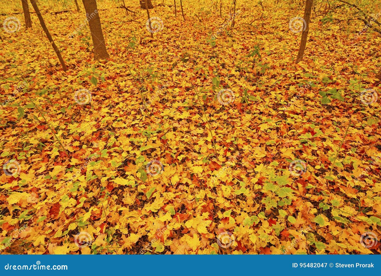 Kolorowi liście na Lasowej podłoga