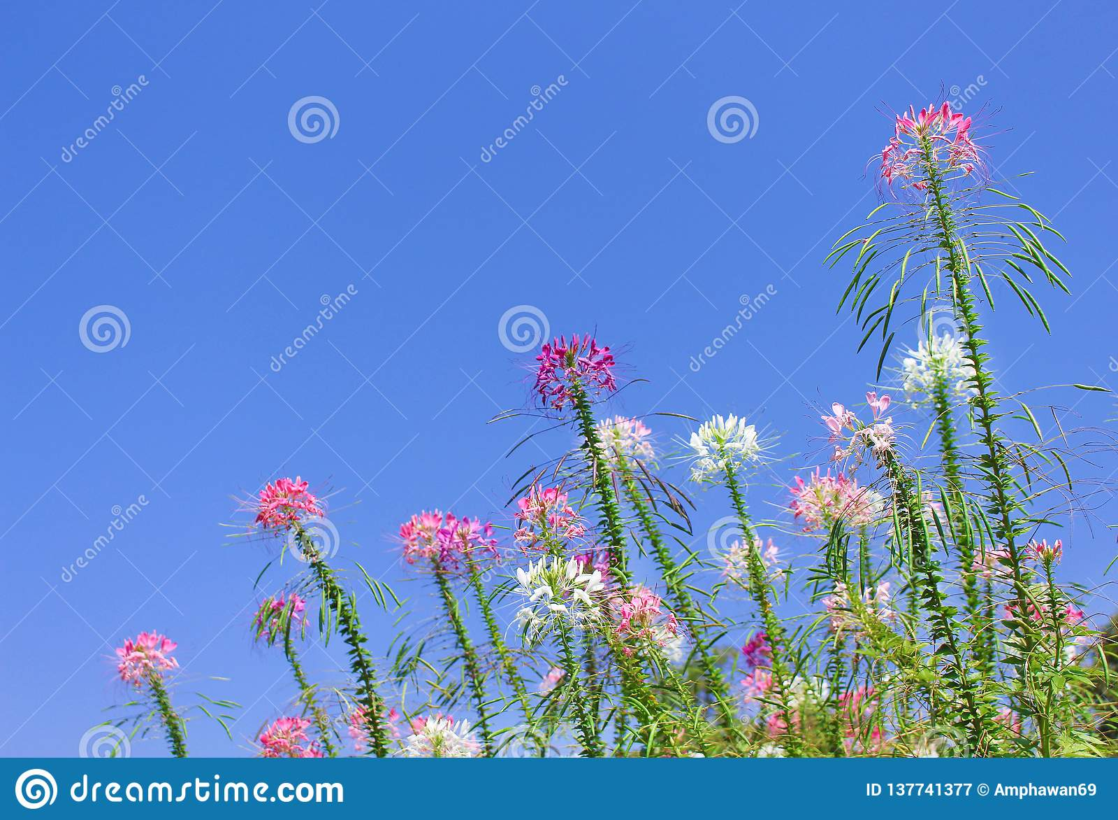 Kolorowi muticolred pająków kwiaty grupują naturalnych wzory kwitnie na jaskrawym niebieskiego nieba tle