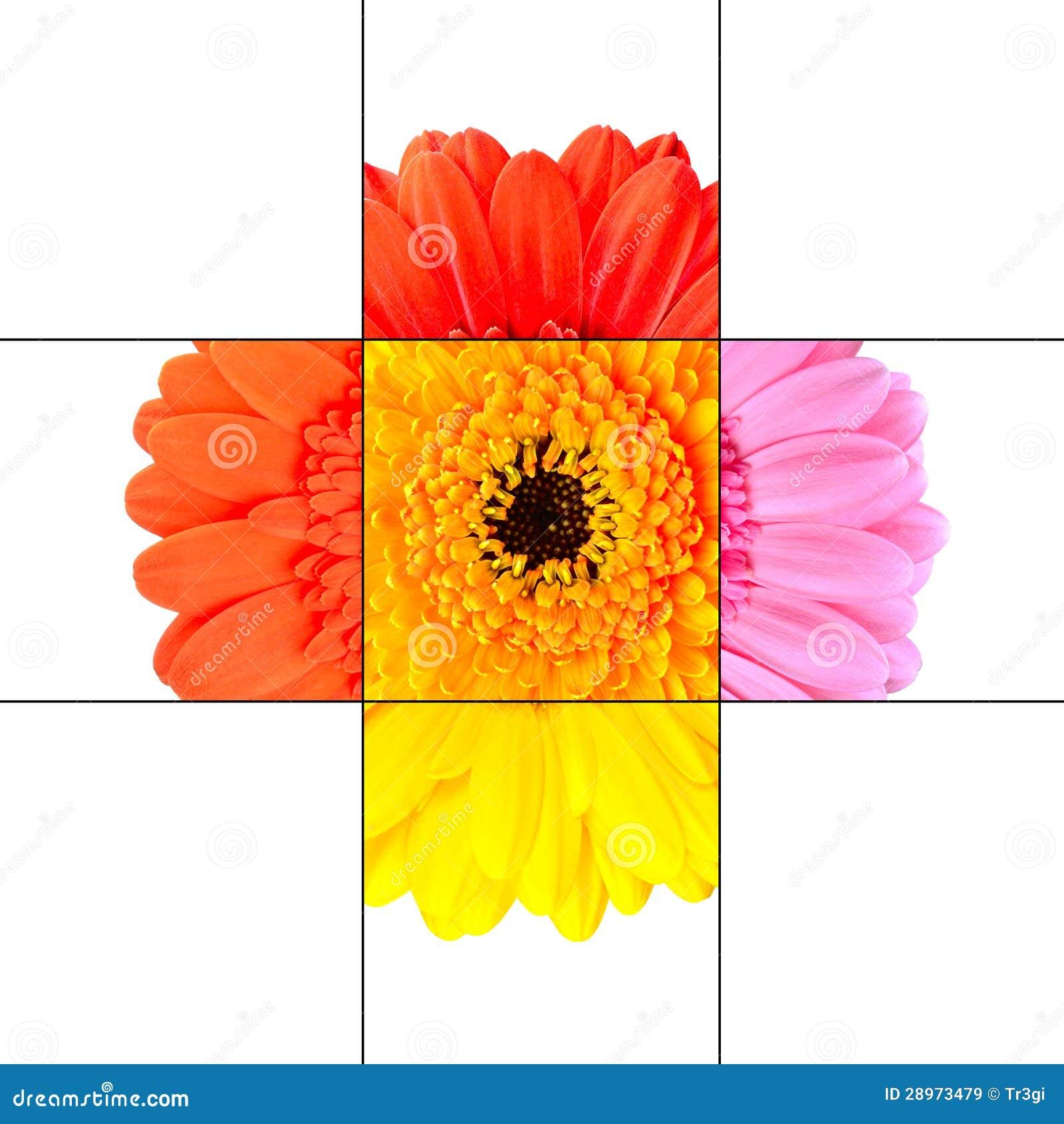 Kolorowy Gerbera nagietka kwiatu mozaiki projekt