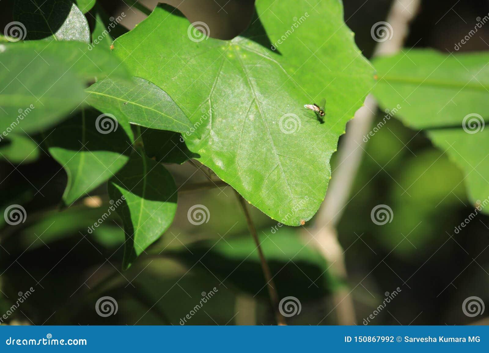 Kolorowy Housefly siedzi dalej robi mię jest materiałem na liściu plenerowa roślina Liście patrzeją zadziwiającymi gdy ja zazwycz