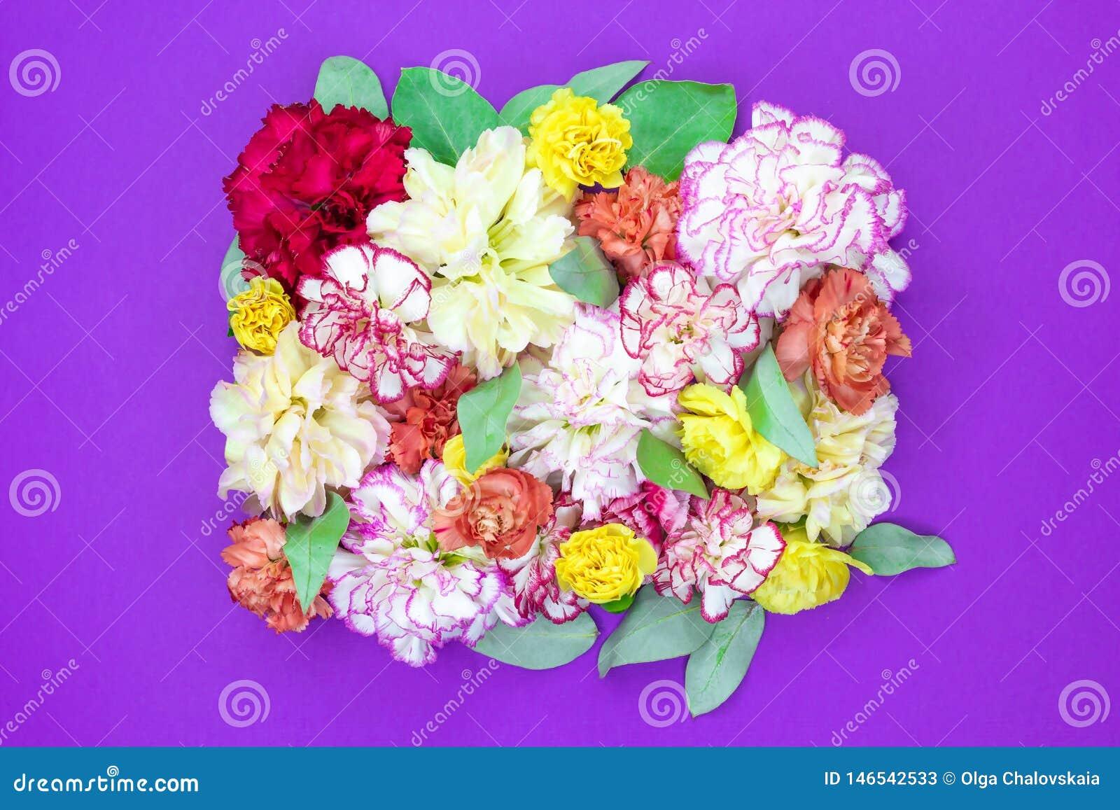 Kolorowy kwiatu bukieta t?o robi? kolorowa go?dzik?w kwiat?w ?ciana dla t?a i tapety