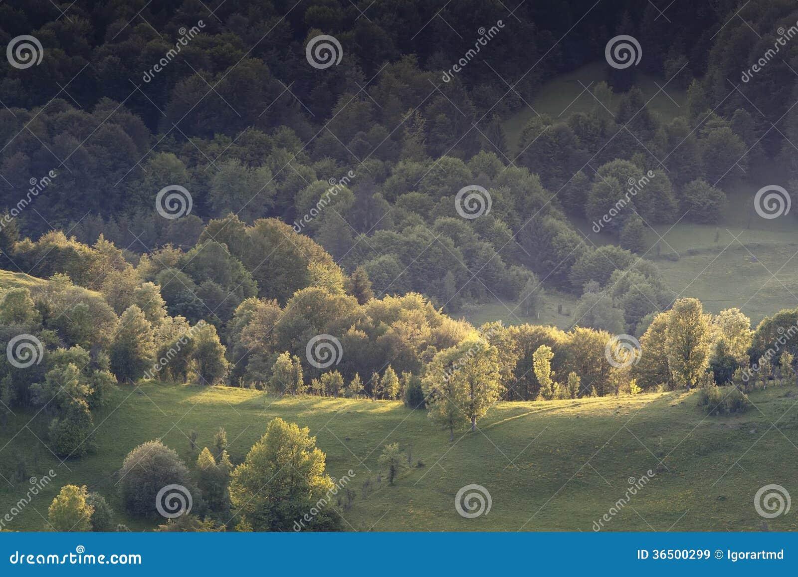 Kolorowy lato krajobraz