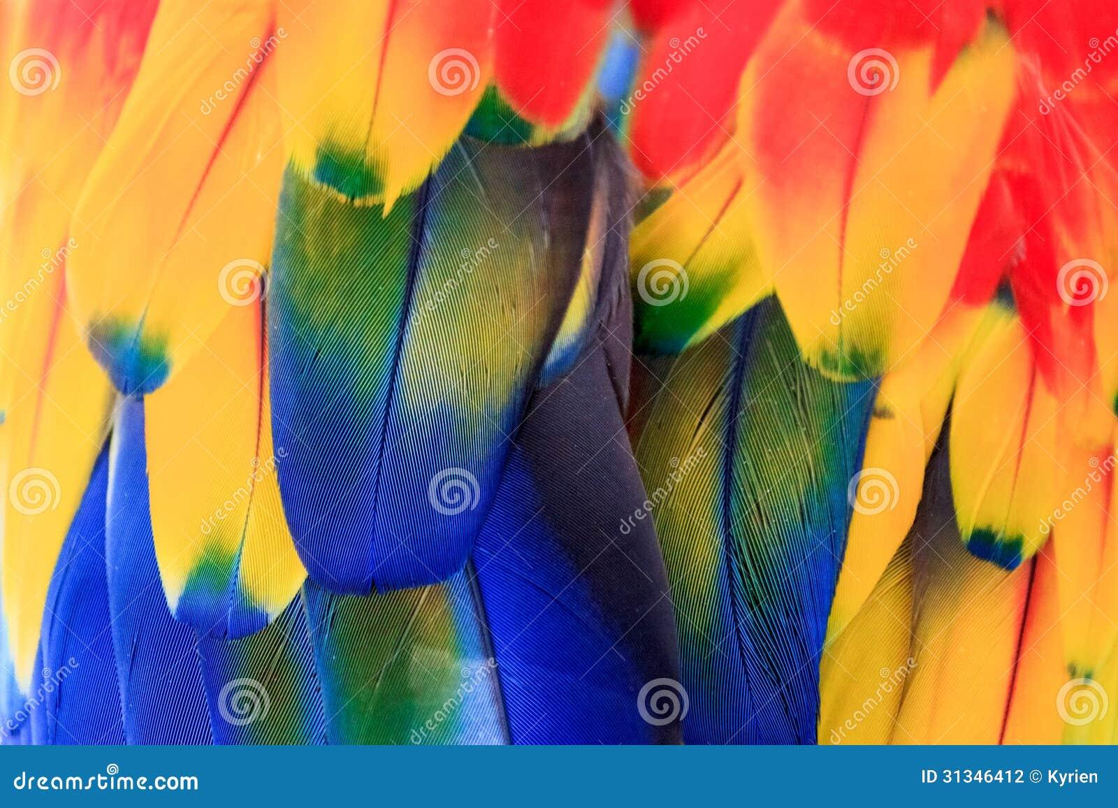 Kolorowy papuzi upierzenie