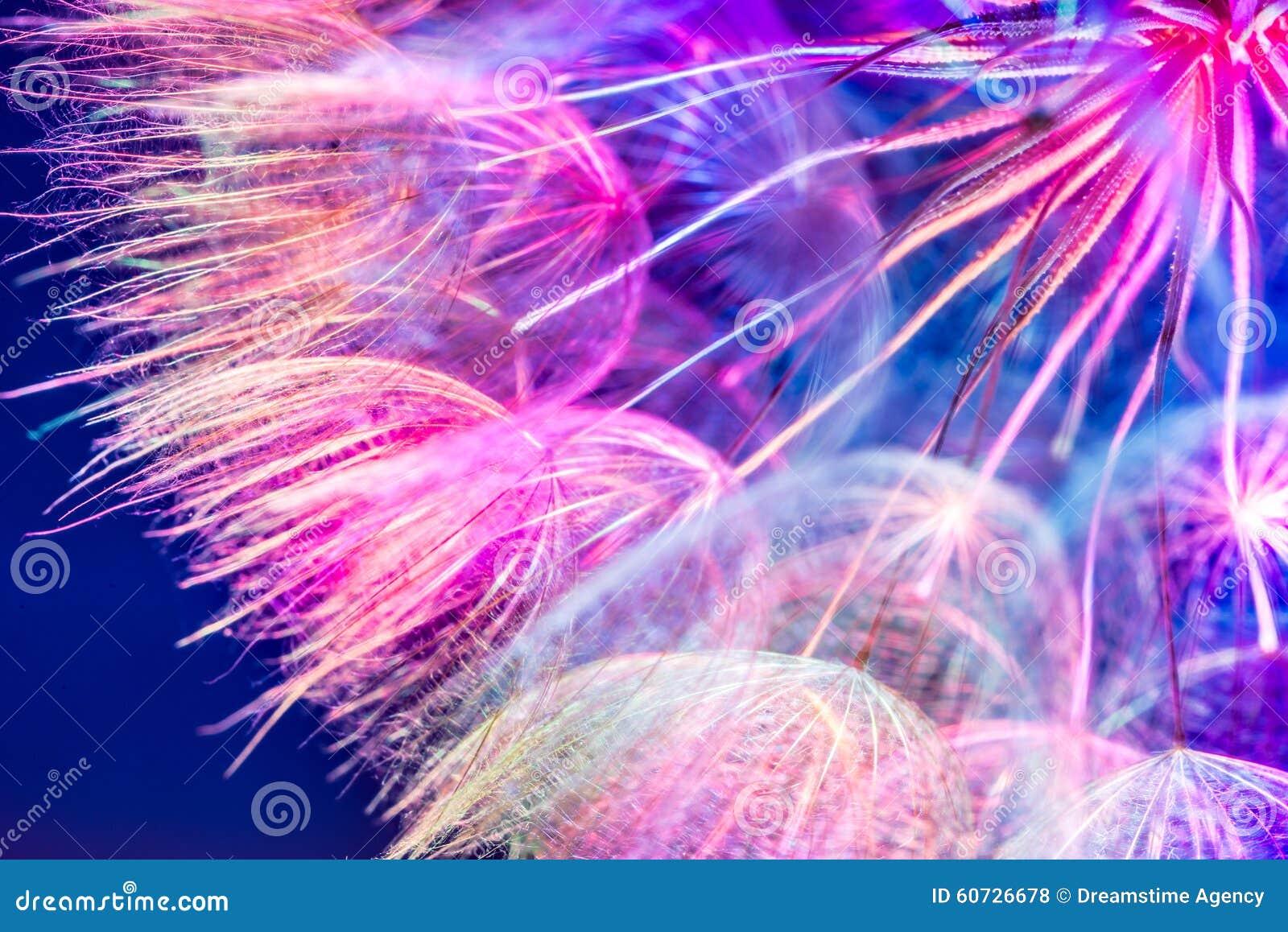 Kolorowy Różowy Pastelowy tło - żywy abstrakcjonistyczny dandelion flowe