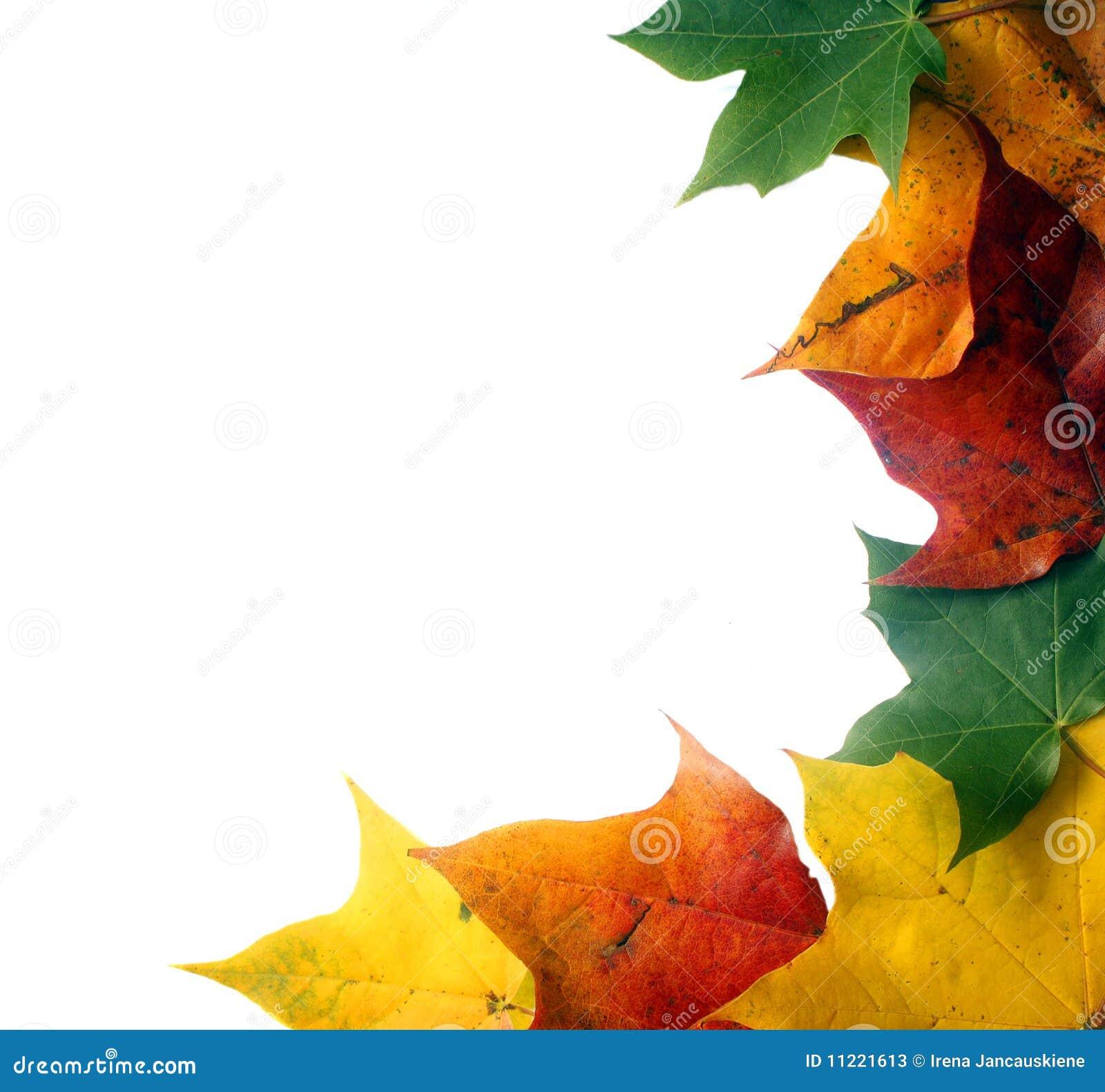 Kolorowy ramowy liść