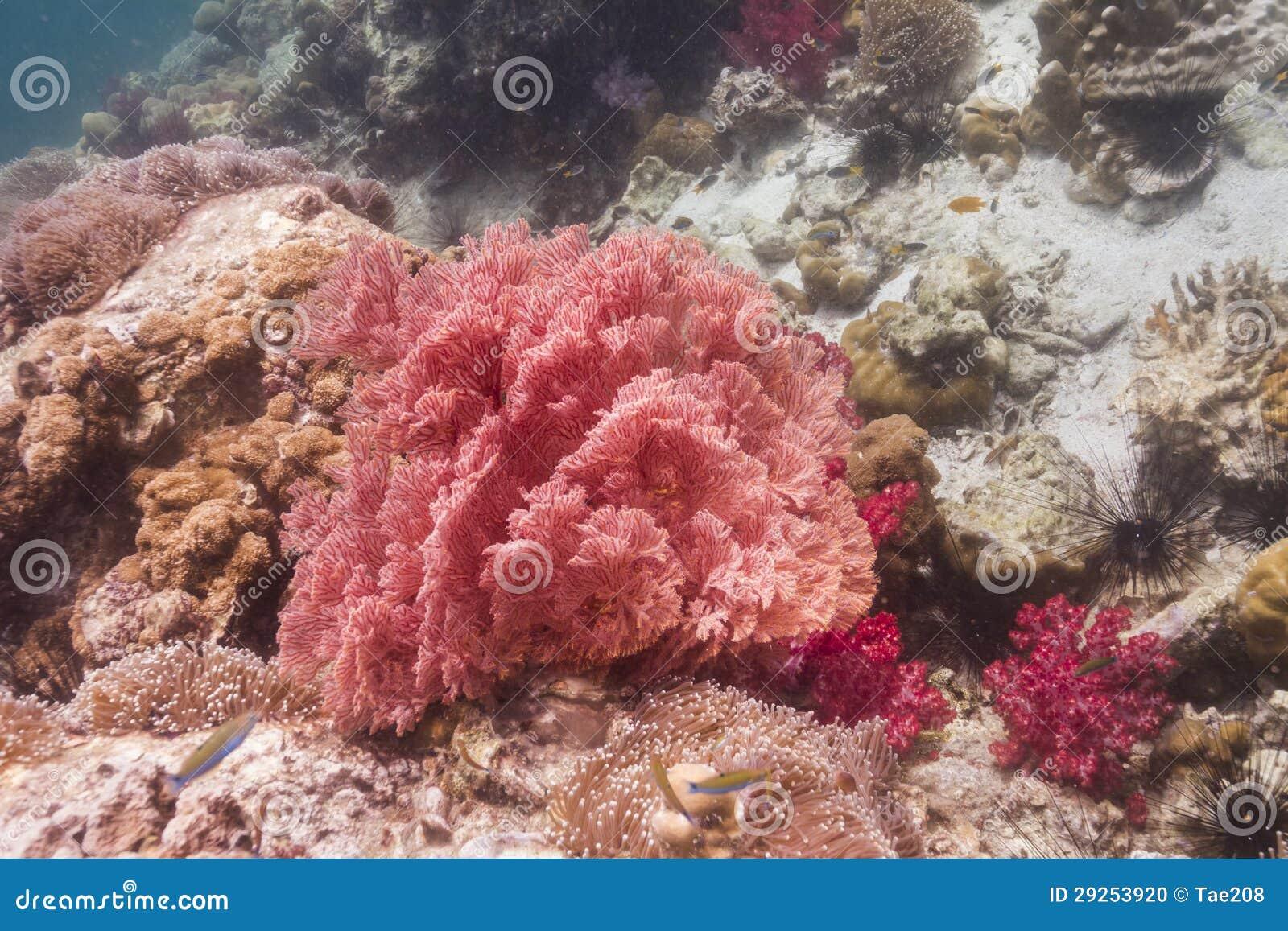 Kolorowy seafan przy Lipe wyspą