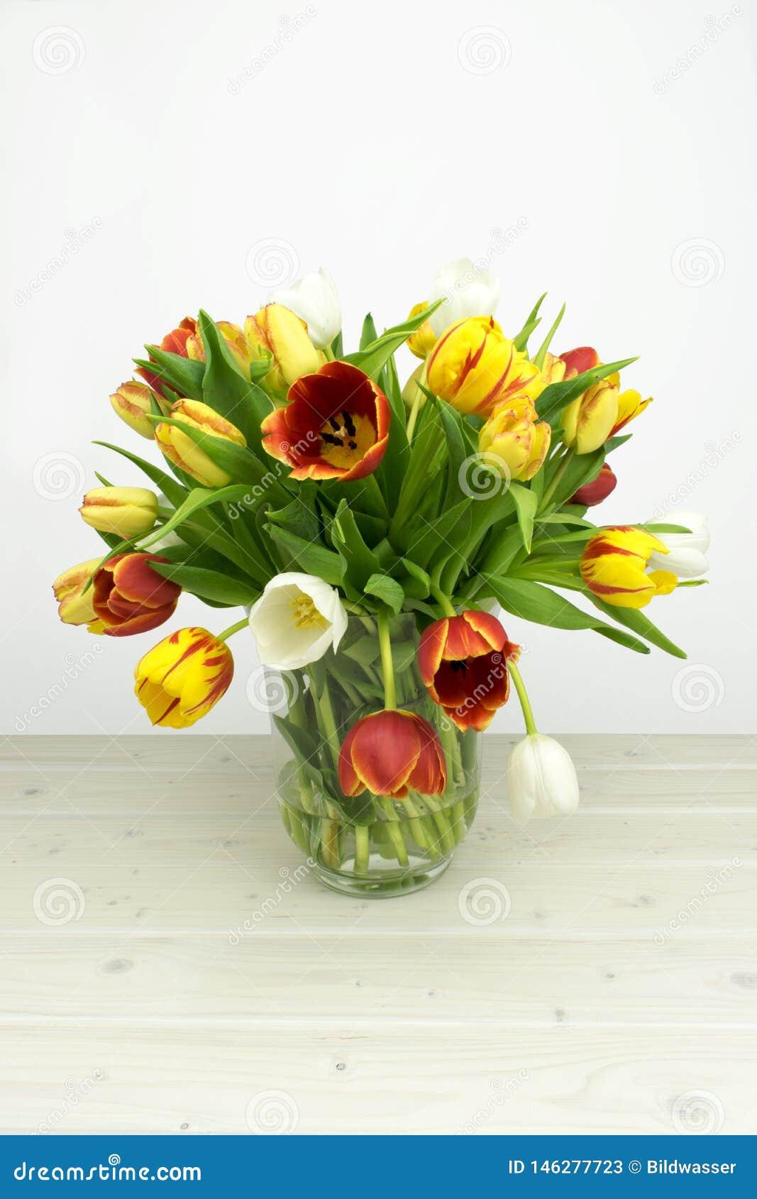 Kolorowy tulpia kwitnie na drewnianym i białym tle