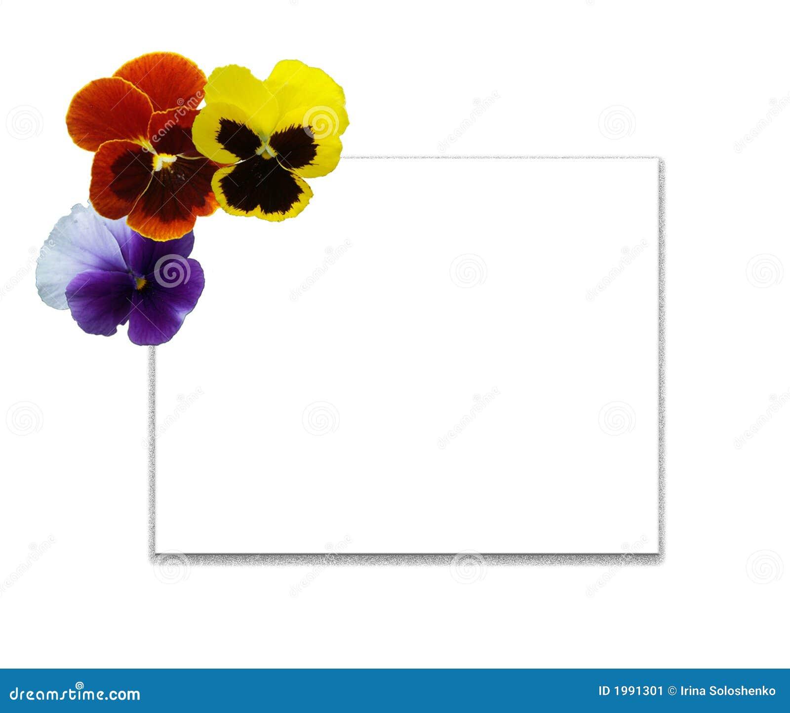 Kolorowy wielo- mięczaki