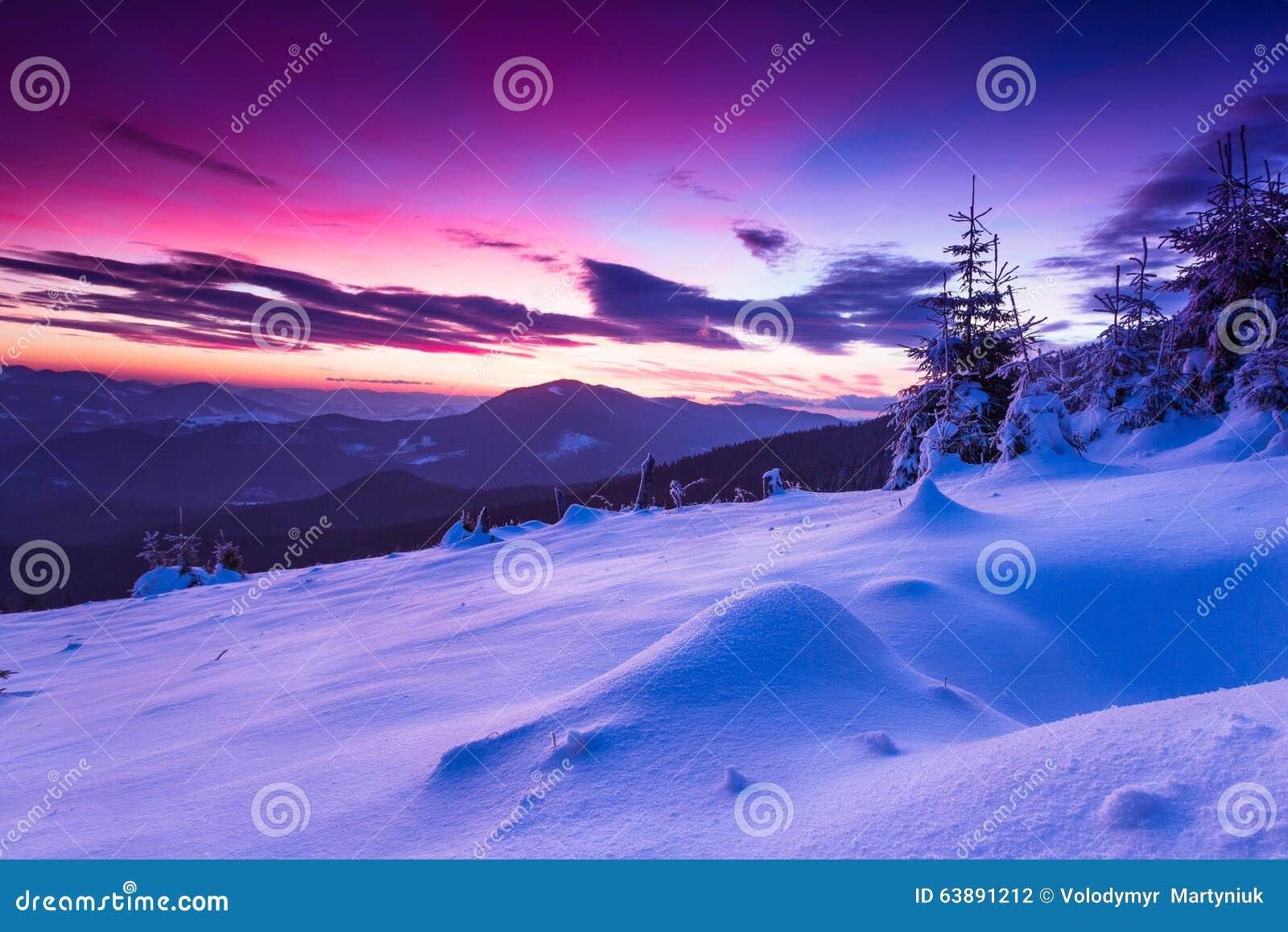 Kolorowy zima ranek w górach overcast dramatyczny niebo Widok śnieżyści conifer drzewa przy wschodem słońca Wesoło Christmas