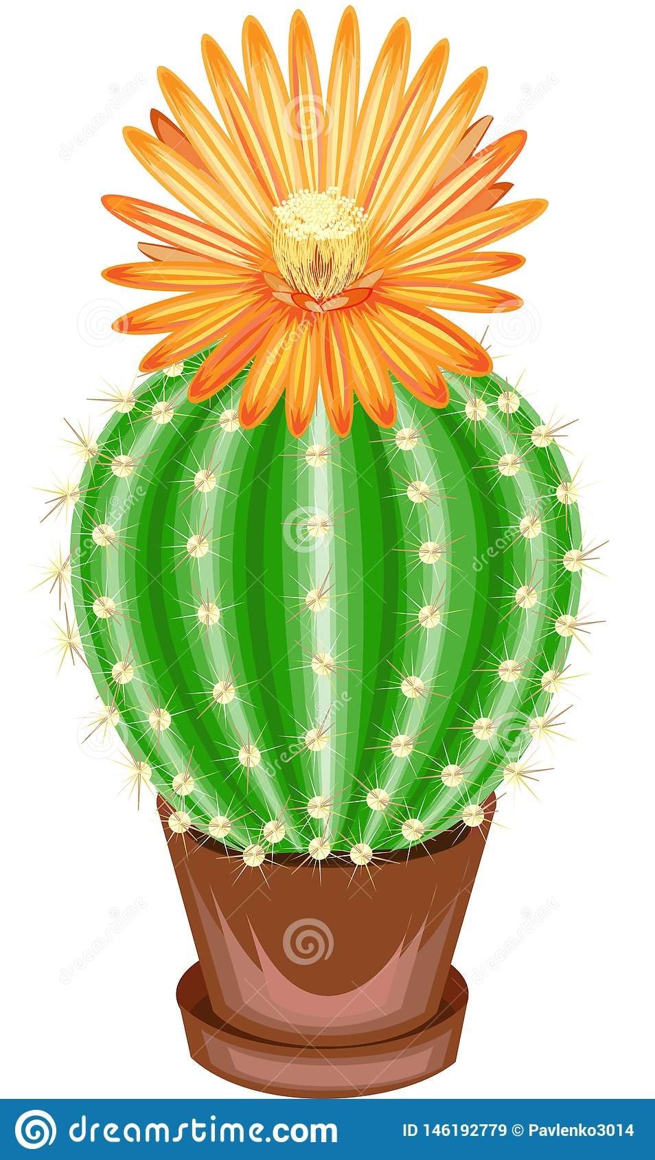 Koloru obrazek puszkuj?cy ro?lina garnek Zielony kaktus jest ba?czasty z tubercles zakrywaj?cymi z kr?gos?upami Mammillaria, hymn