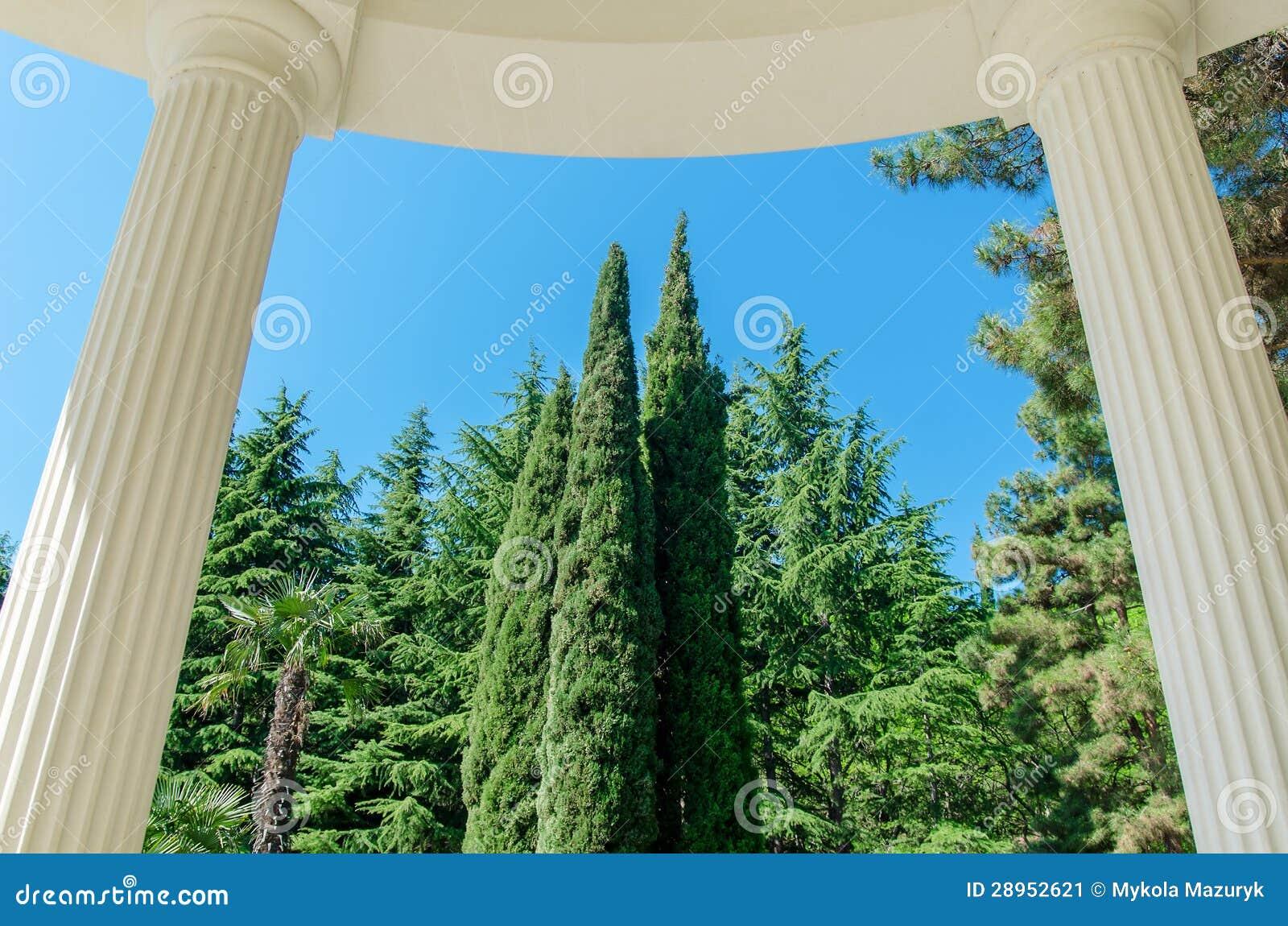 Kolumna i drzewo