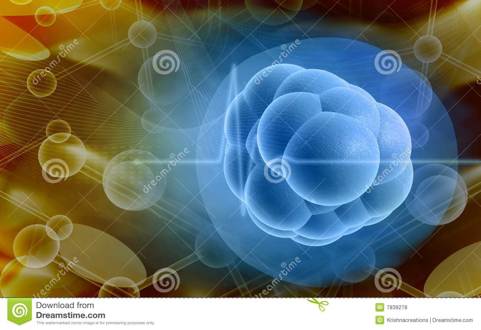 Komórka trzon