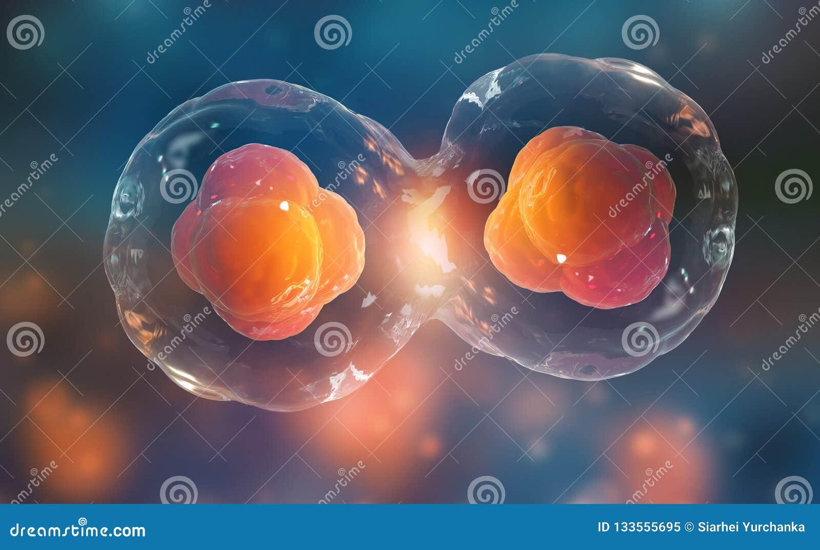 Komórki pod mikroskopem Komórka podział Komórkowa terapia