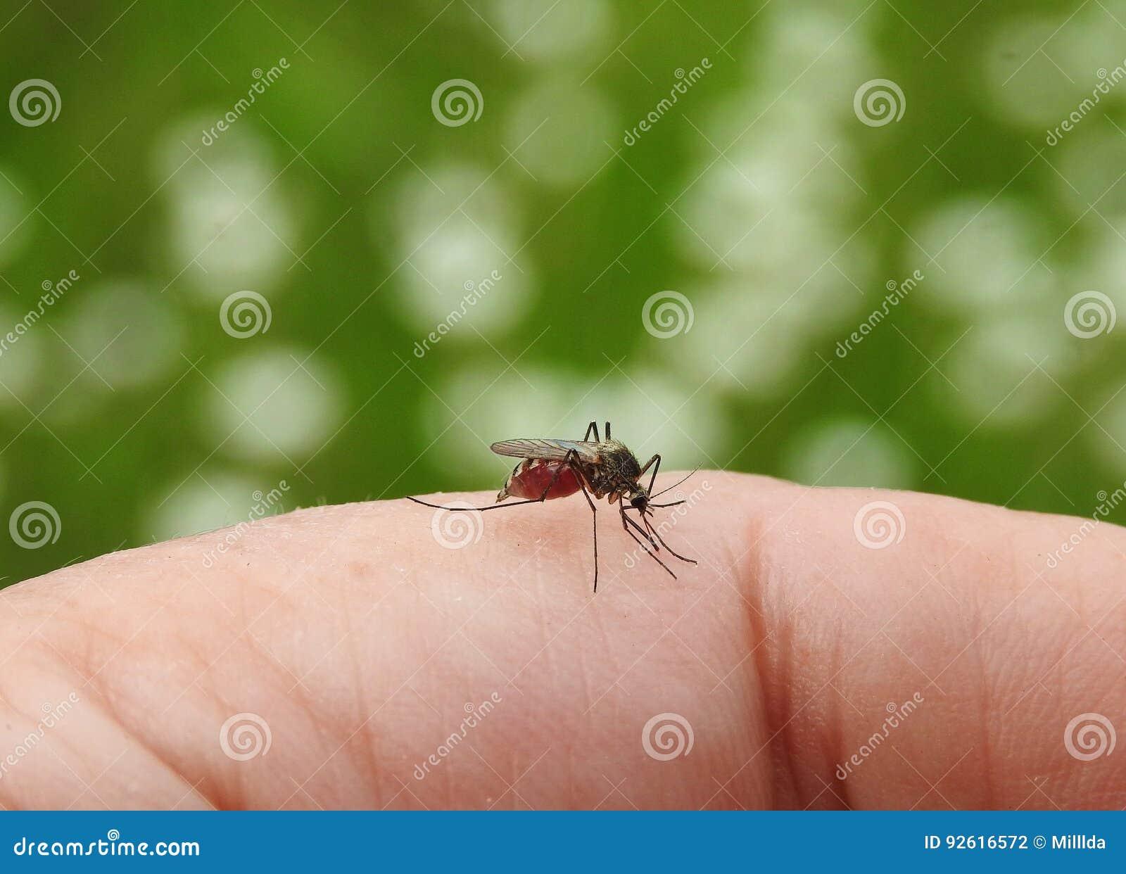 Komarów kąski w palcową skórę
