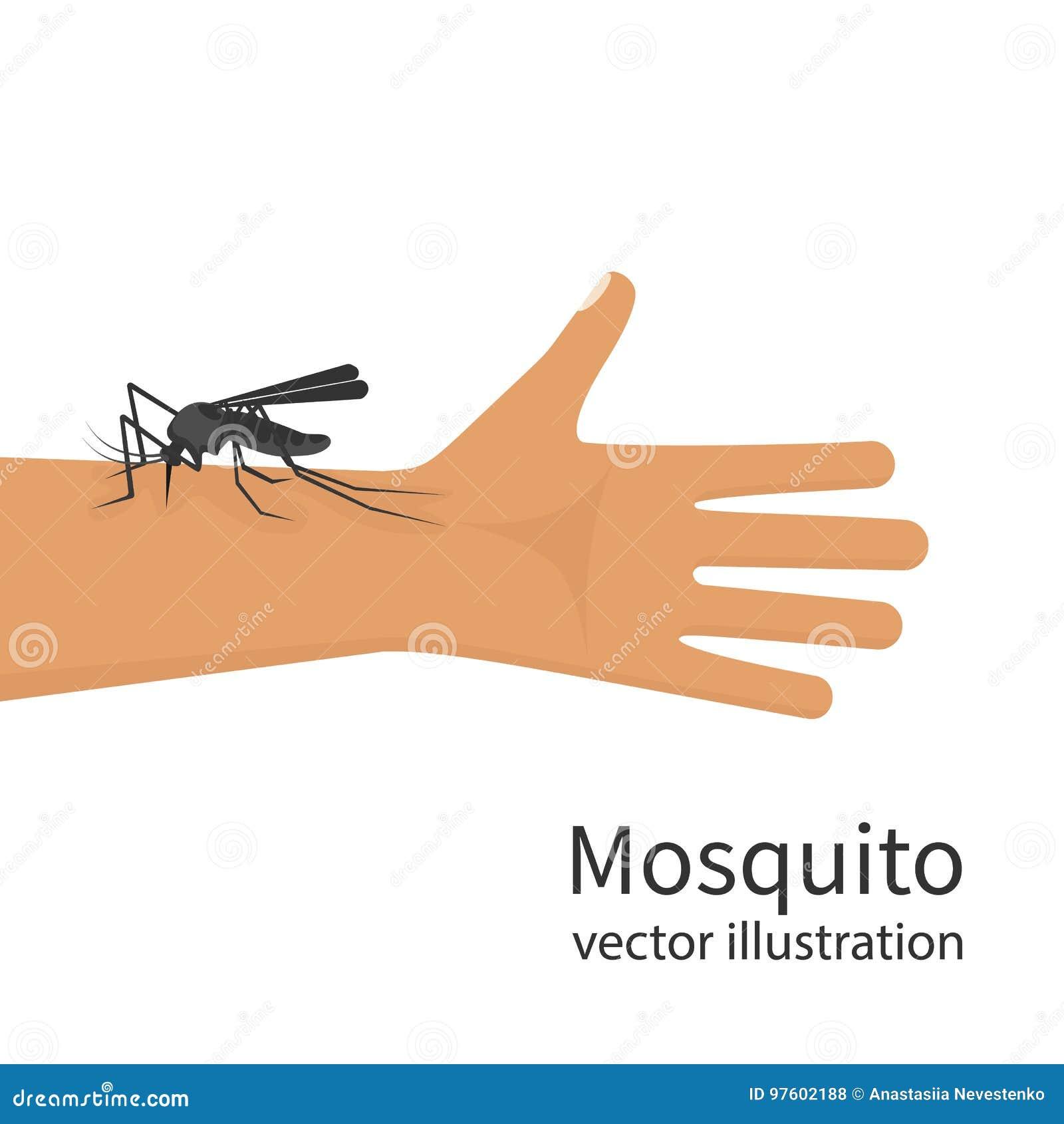 Komara kąsek na skóry ręki istoty ludzkiej wektorze