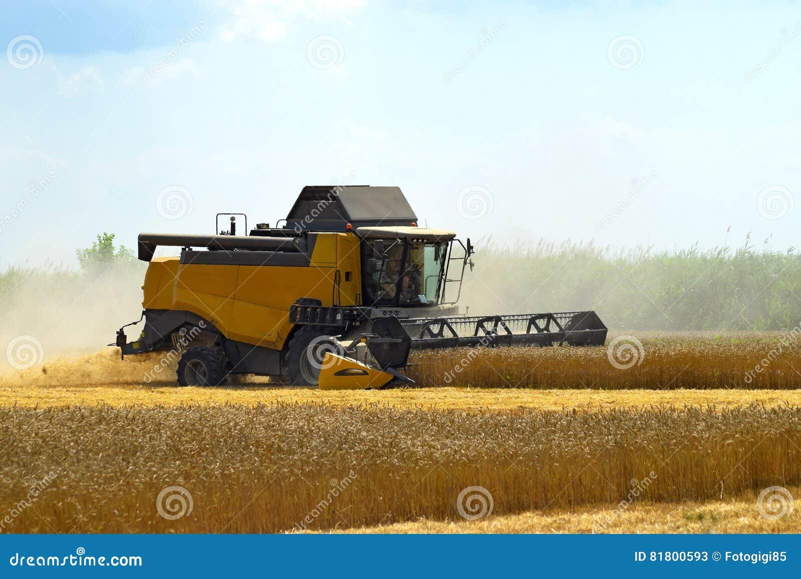 Kombain собирает на урожае пшеницы Сельскохозяйственная техника в поле