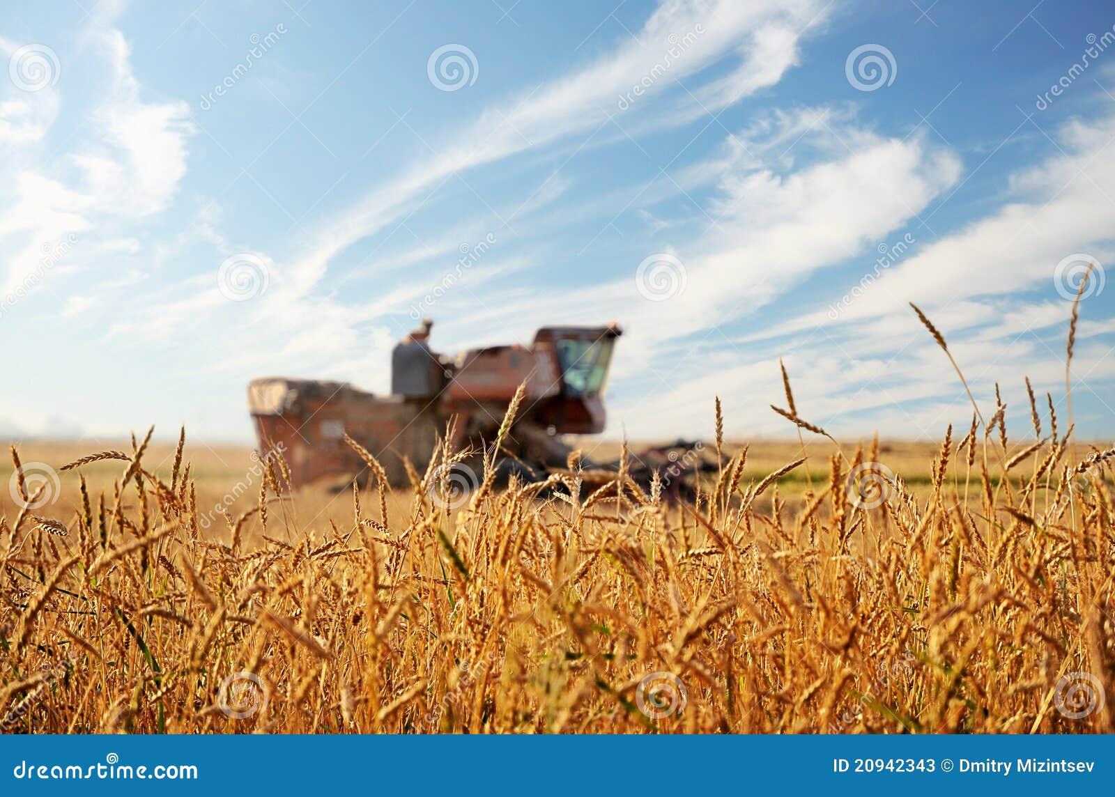 Kombain in field