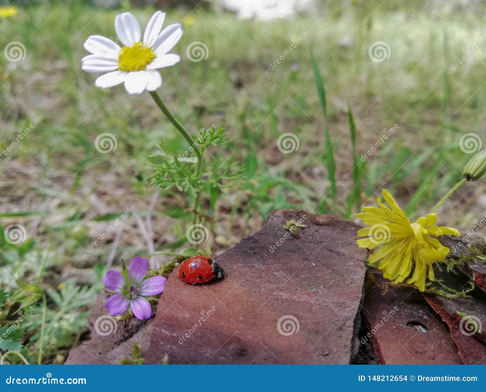 Kombinacja kwiaty z natur?