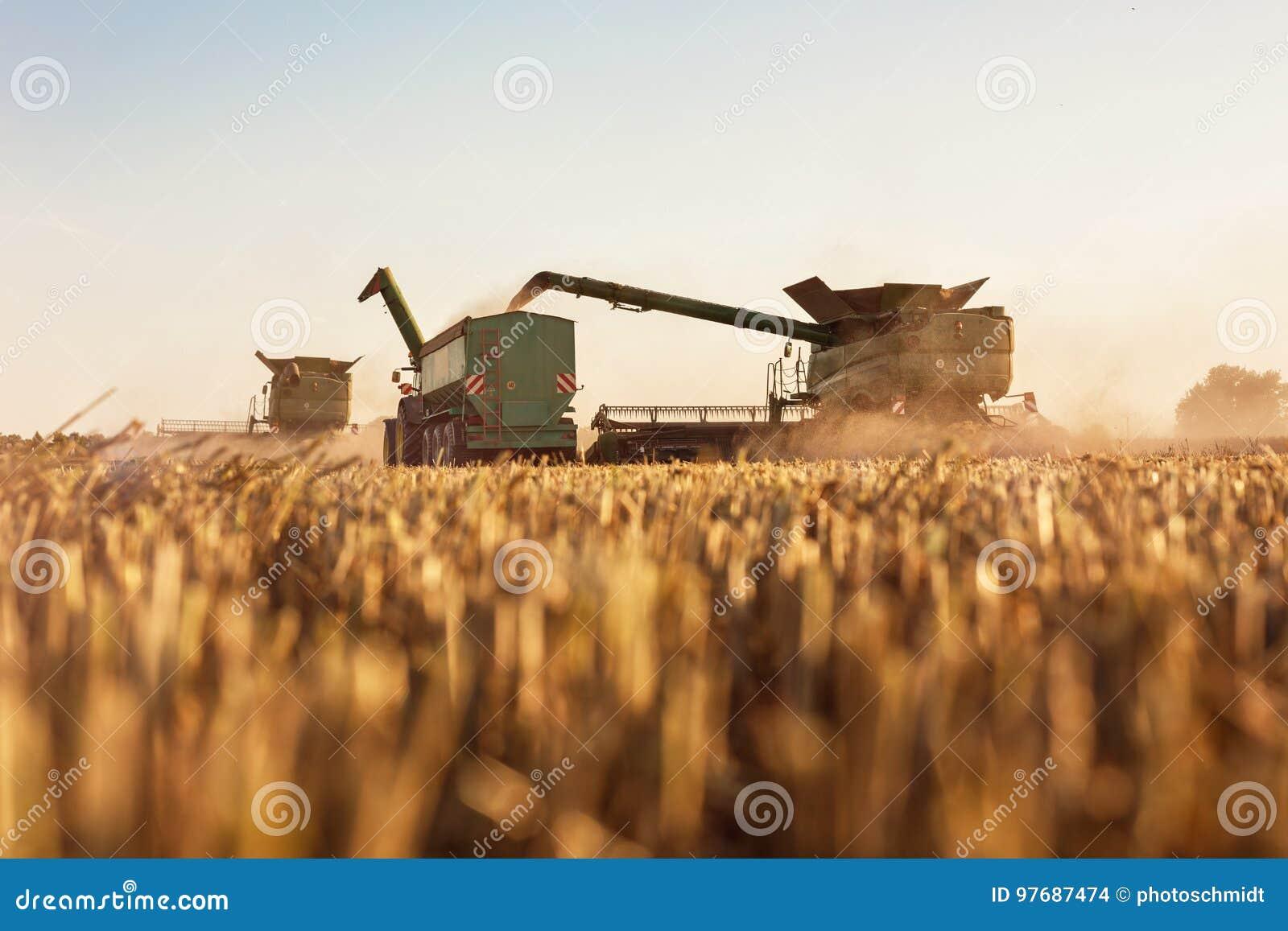 Kombinera läggande tillbaka korn in i traktorsläpet