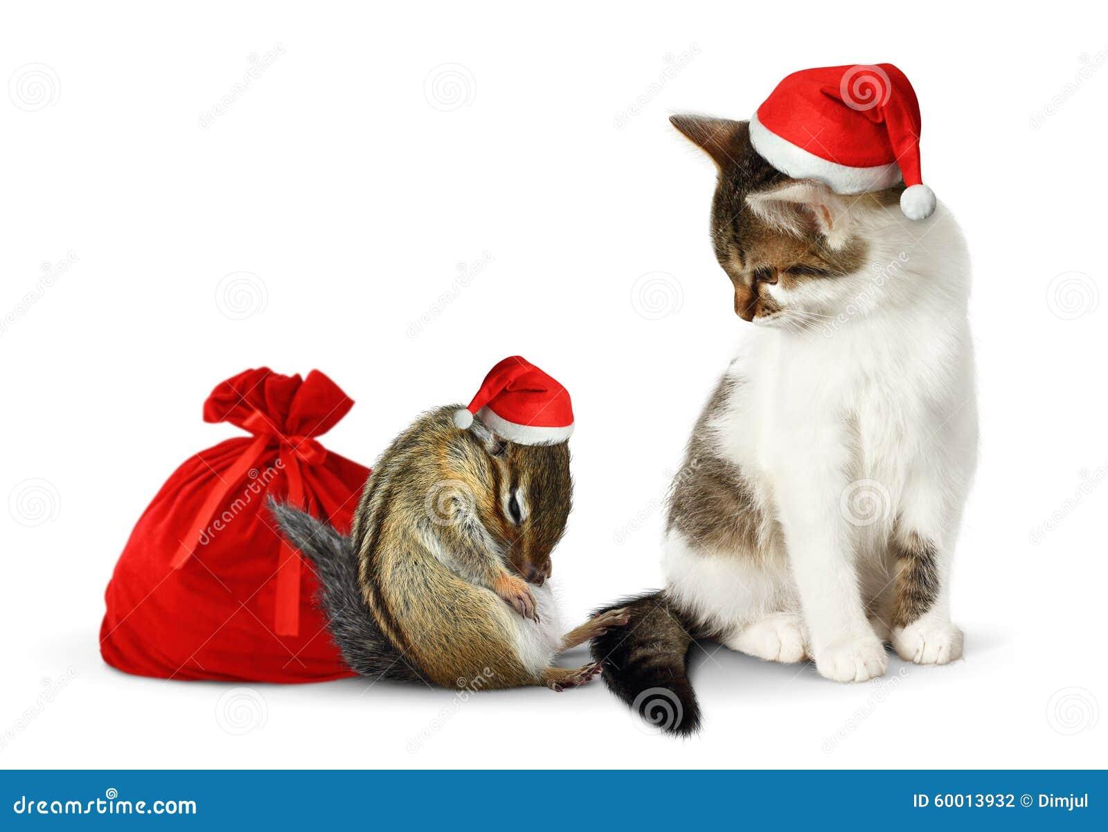 Komikerxmas-husdjur, rolig jordekorre och katt med den santa hatten och säcken