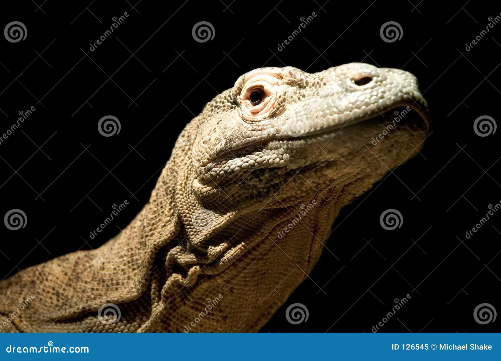Komodo дракона