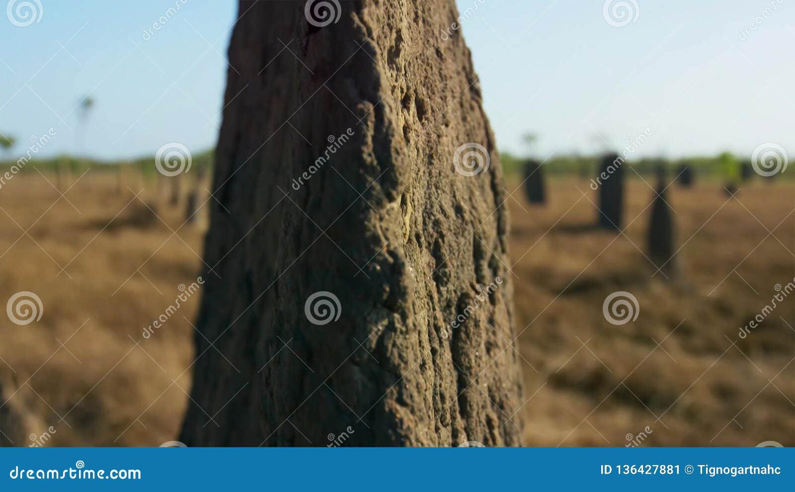 Kompasstermit bevarar minnet av deras bransch i skulptur Dessa häpnadsväckande kullar är tio fot som är högväxt och alltid byggs