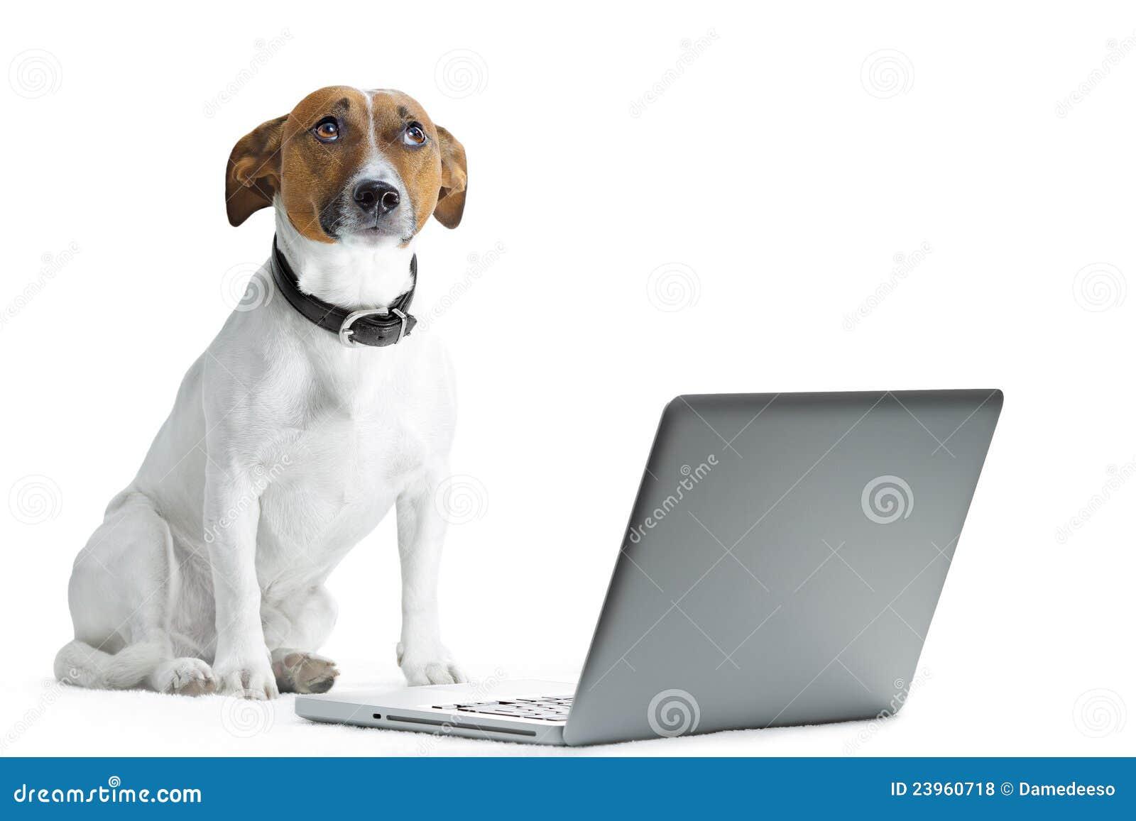 Komputeru pies