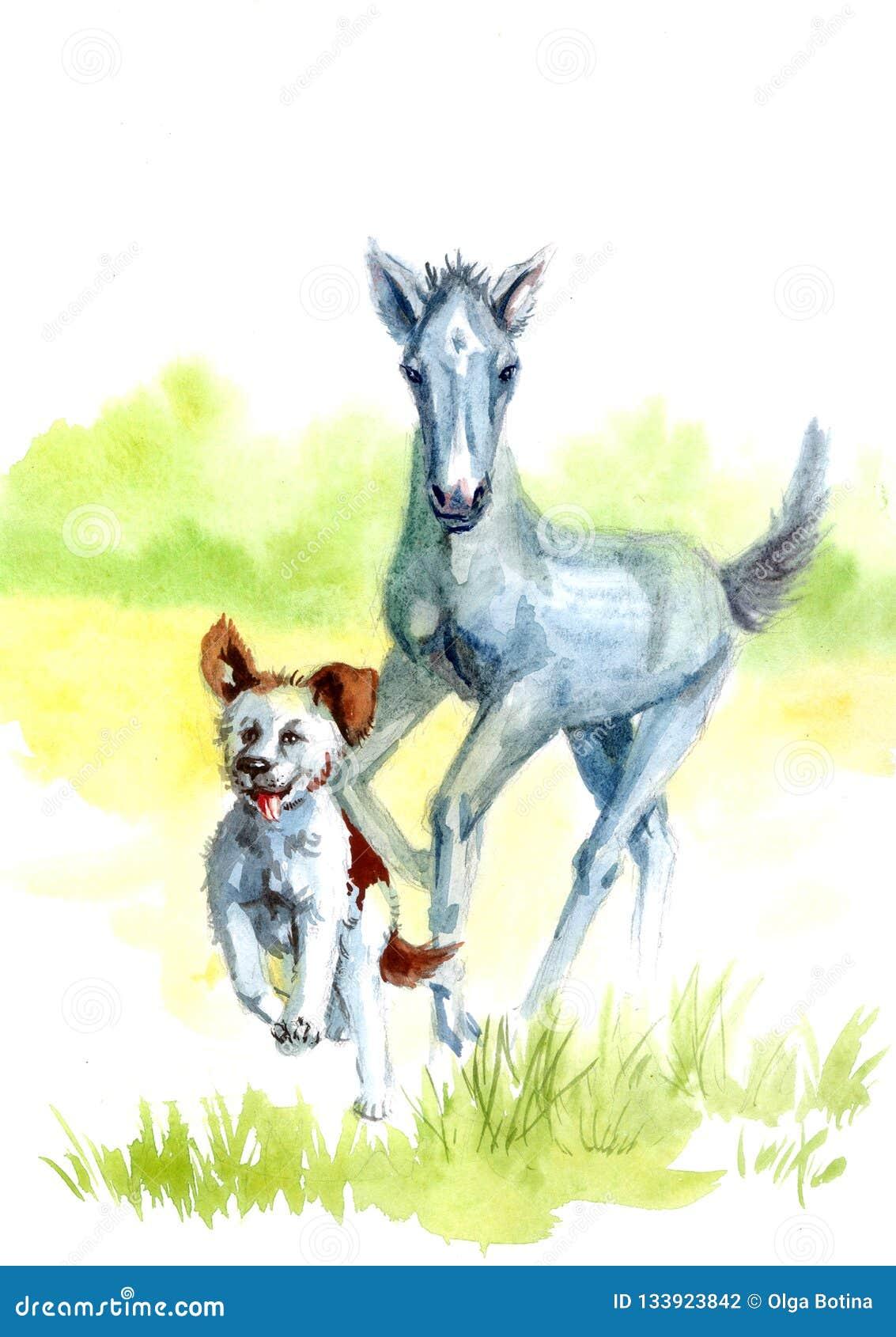 Konia i psa akwarela
