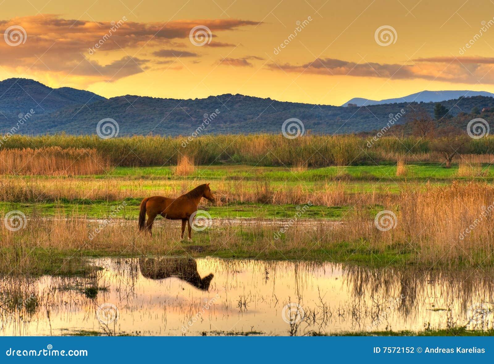 Konia krajobraz