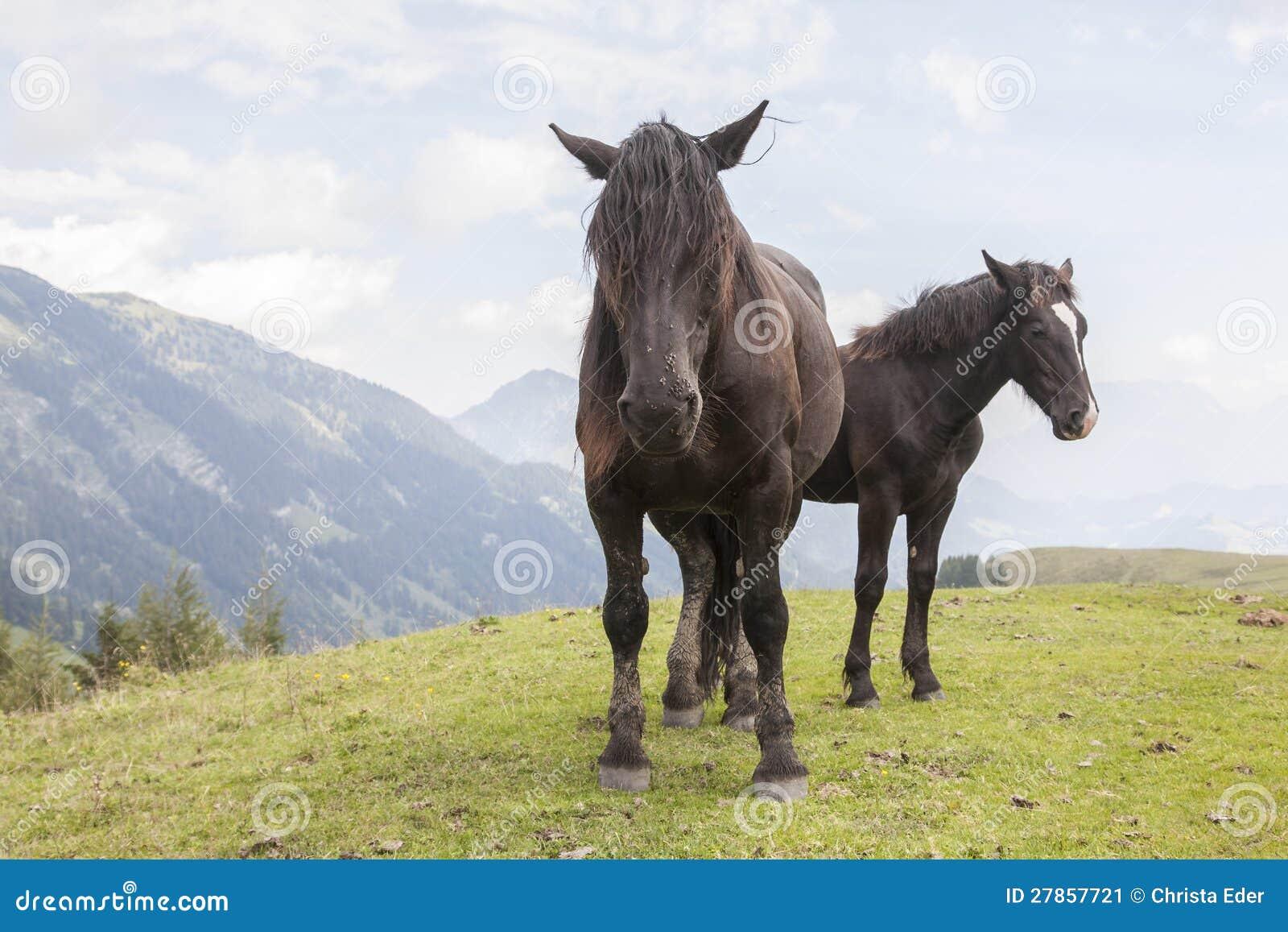 Konia lato w górach