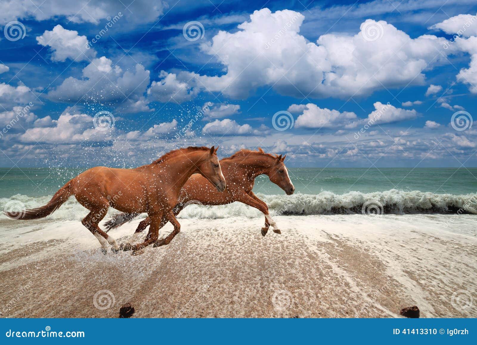 Konie biega wzdłuż seashore