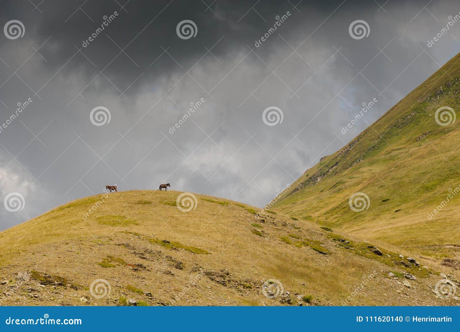 Konie na wzgórzu przychodzi up burzy i