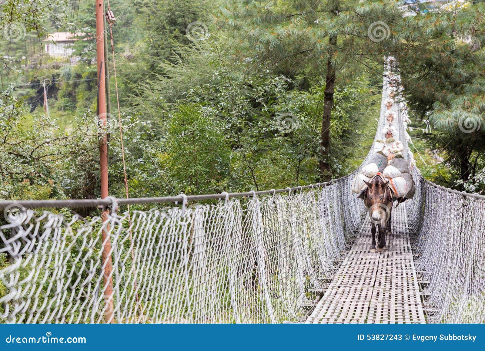 Konie niesie obciążeniowego skrzyżowanie zawieszenie mosta