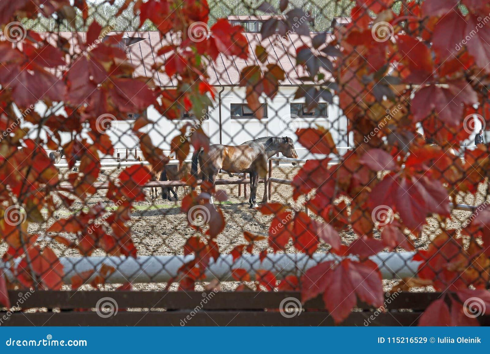 Konie stoją blisko ogrodzeń w arenie