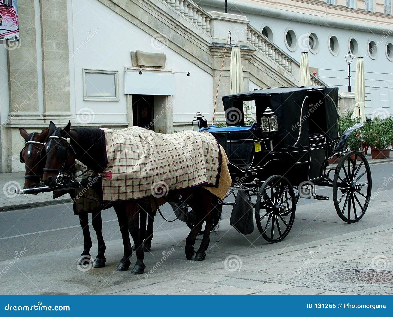 Konie Vienna