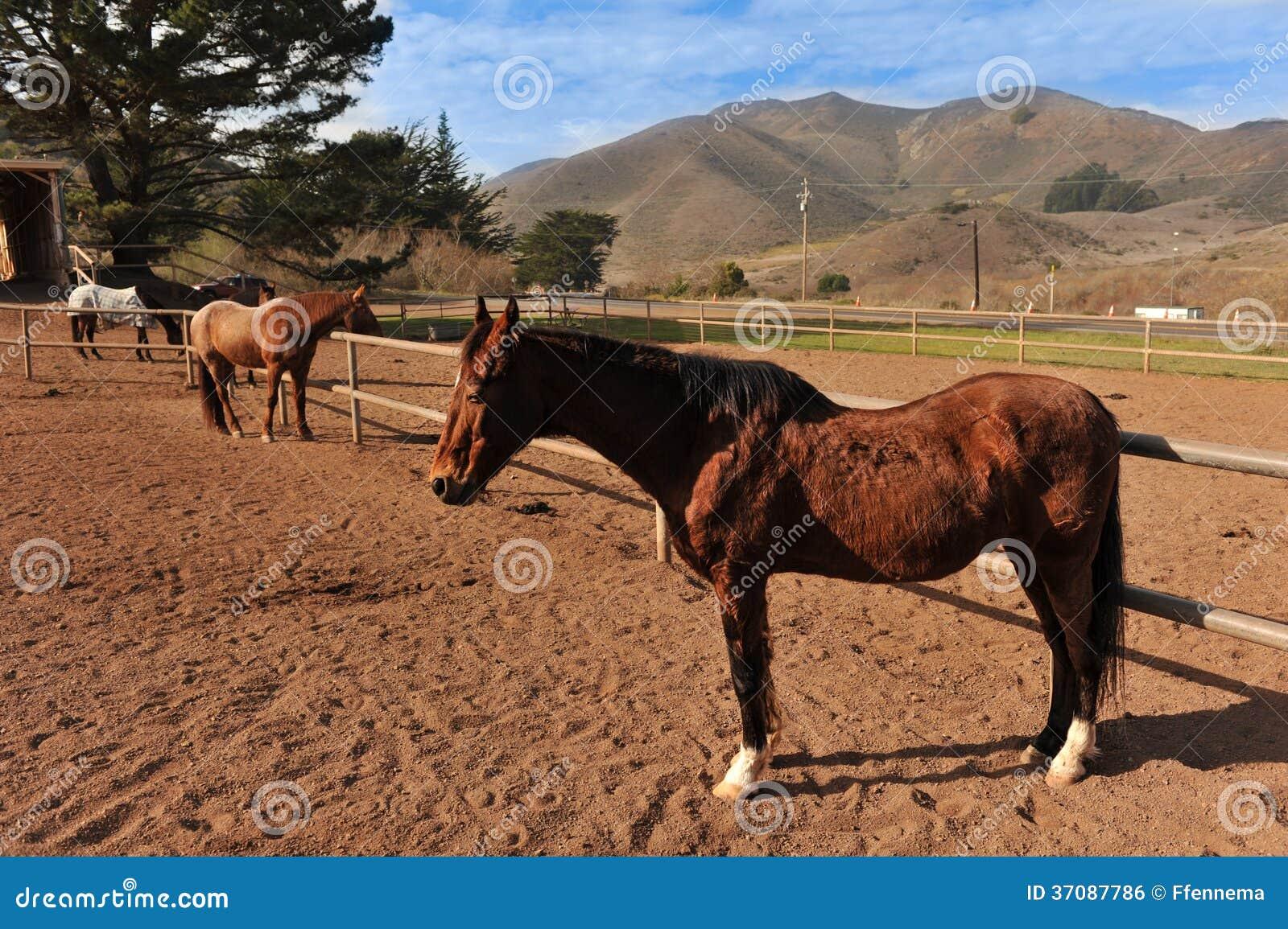 Download Konie W Fechtuję Się W Terenie Z Górami Zdjęcie Stock - Obraz złożonej z ssak, koń: 37087786